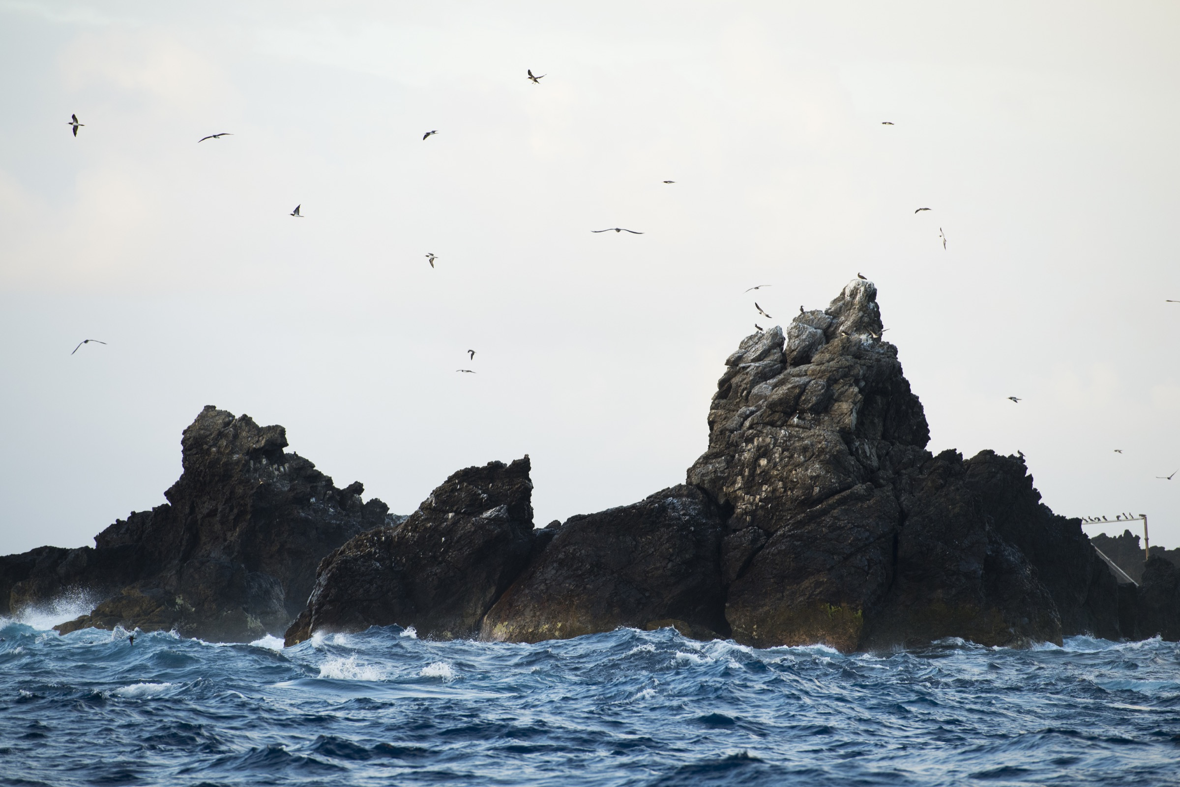 Hundreds of resident brown boobies (Sula leucogaster) circle above Saint Peter and Saint Paul Archipelago, a tiny set of islets in the middle of the Atlantic Ocean. Photograph by Novus Select