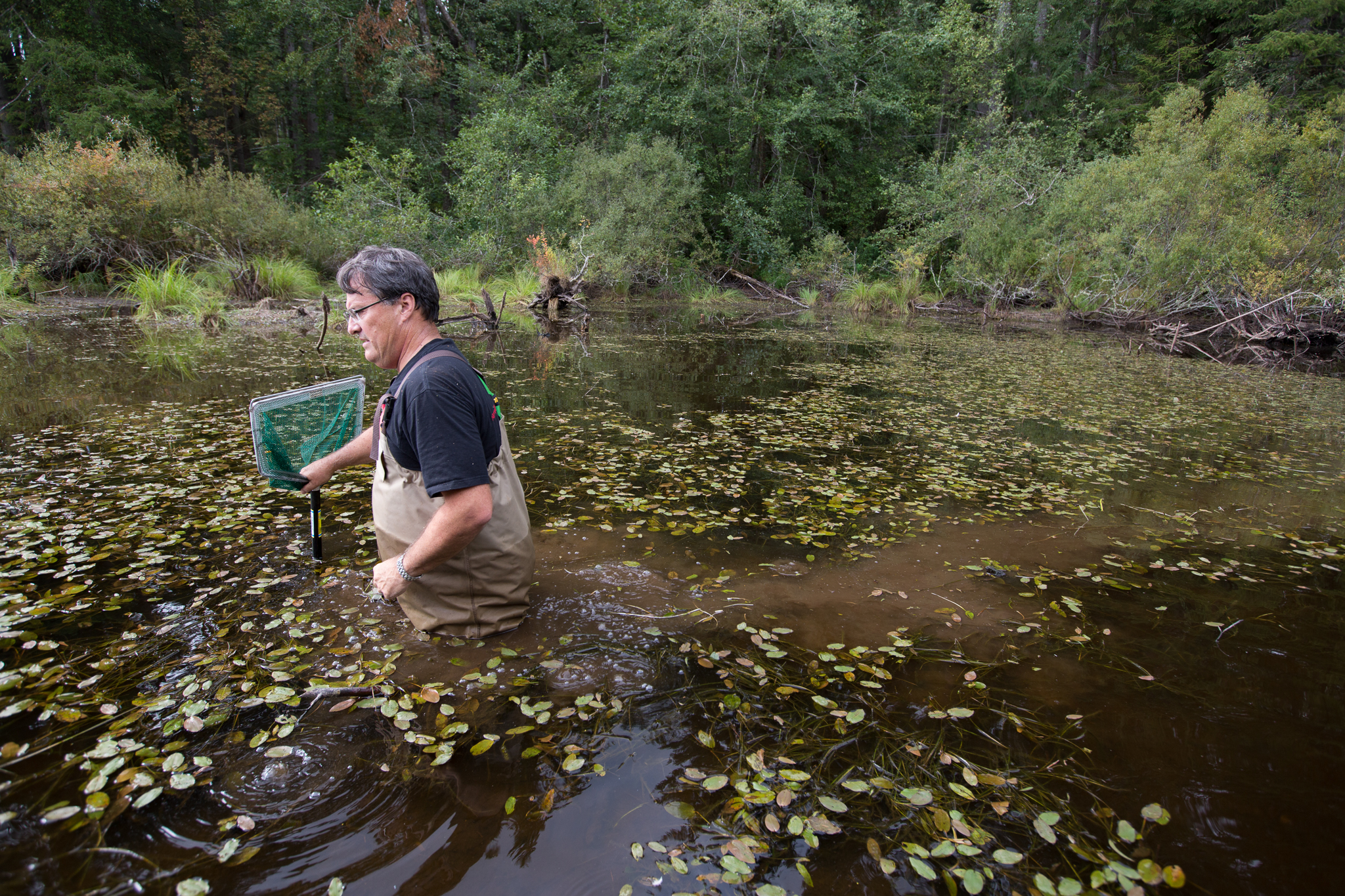 "Marc Hayes checked on released frogs that were raised by inmates at Cedar Creek. ""I was really gratified that the program worked as well as it did,"" he says. ""Given my initial skepticism, I take it all back.""  Photograph by Cyril Ruoso."