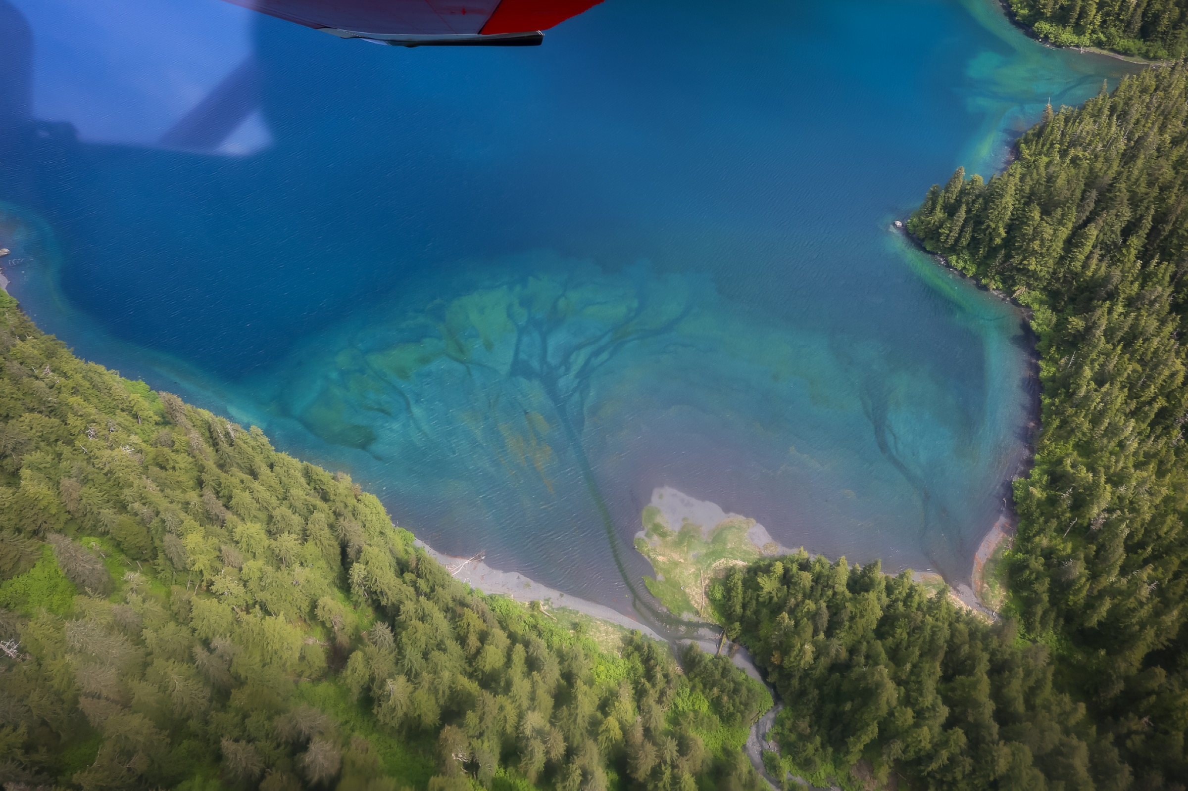 A view from the plane, showing the head of Shelter Bay on Evans Island in western Prince William Sound. Photograph by Julia Rosen