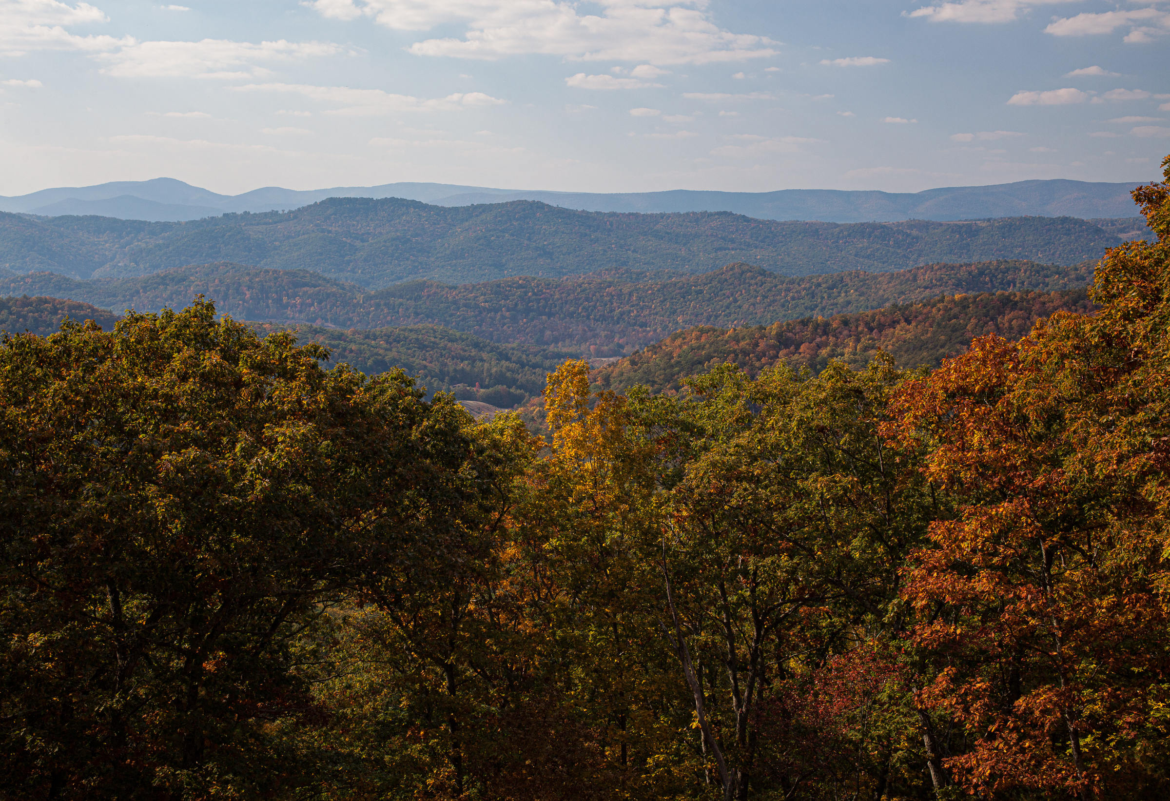 An overlook within George Washington National Forest in Highland County, Virginia. This region is critical for the protection of the endangered cow knob salamander. Photograph by Steven David Johnson