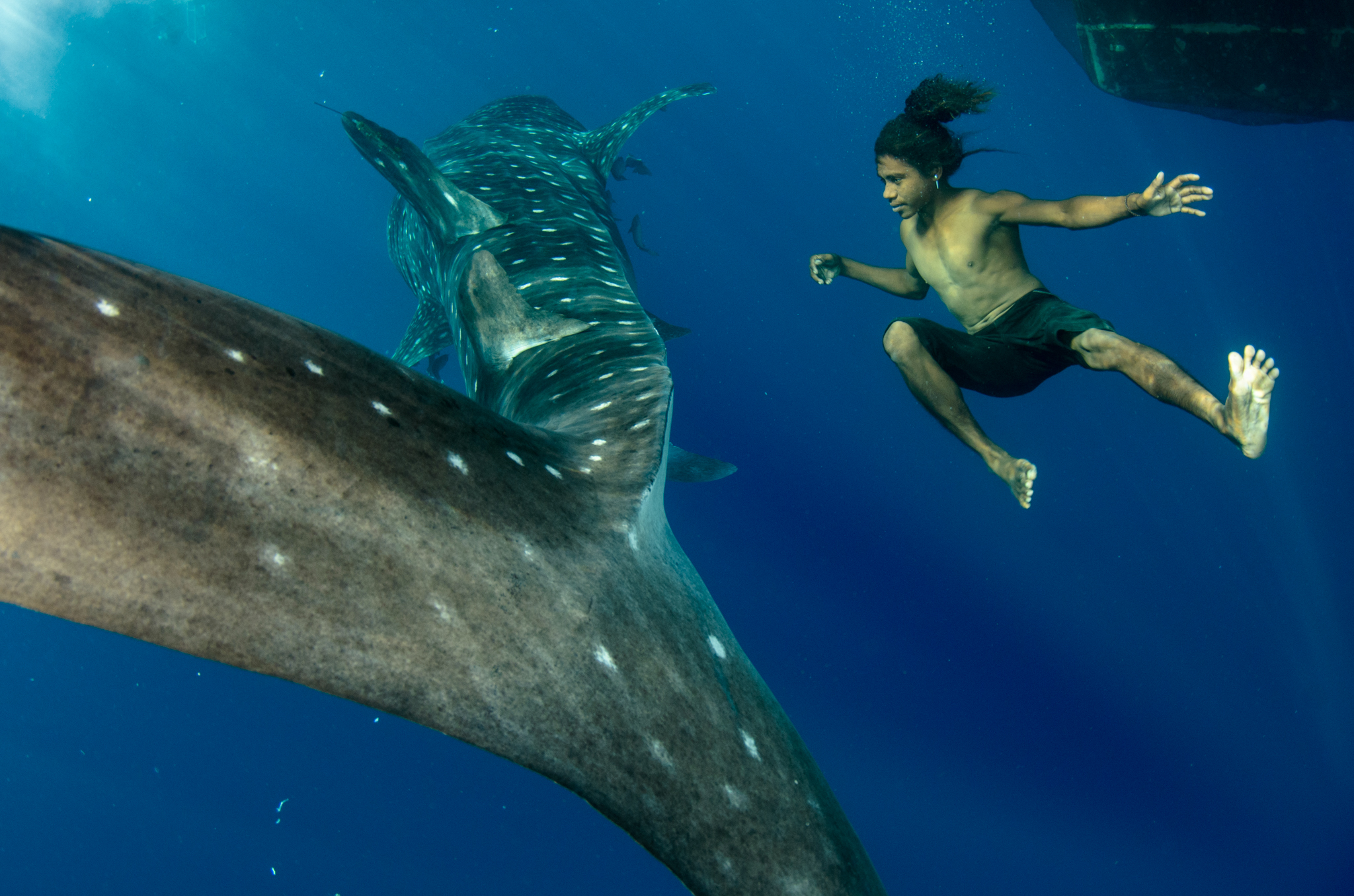 A young fisherman, without mask, snorkel, or flippers jumps in with a whale shark as the behemoth passes by his bagan.