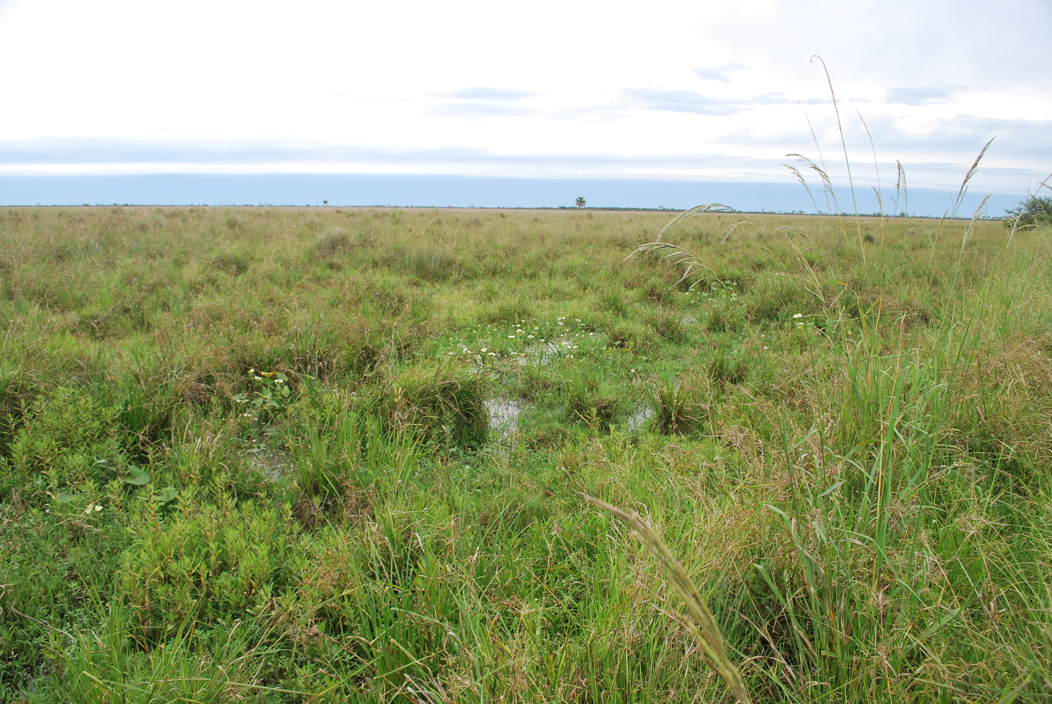 Standing water in one of Iberá's expansive grasslands—rubber boots recommended—Photo by Brooke Jarvis