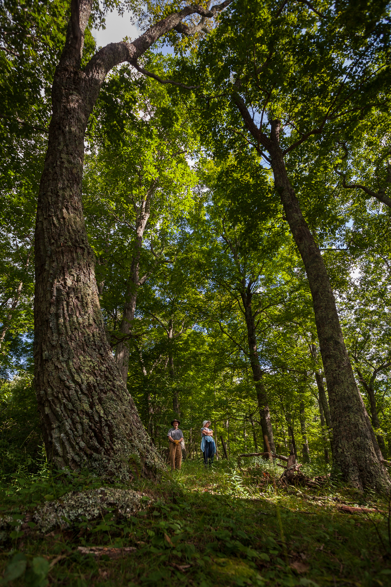 Bill and Lynn Limpert stand by an old-growth maple on their property in Little Valley, Virginia. Photograph by Steven David Johnson
