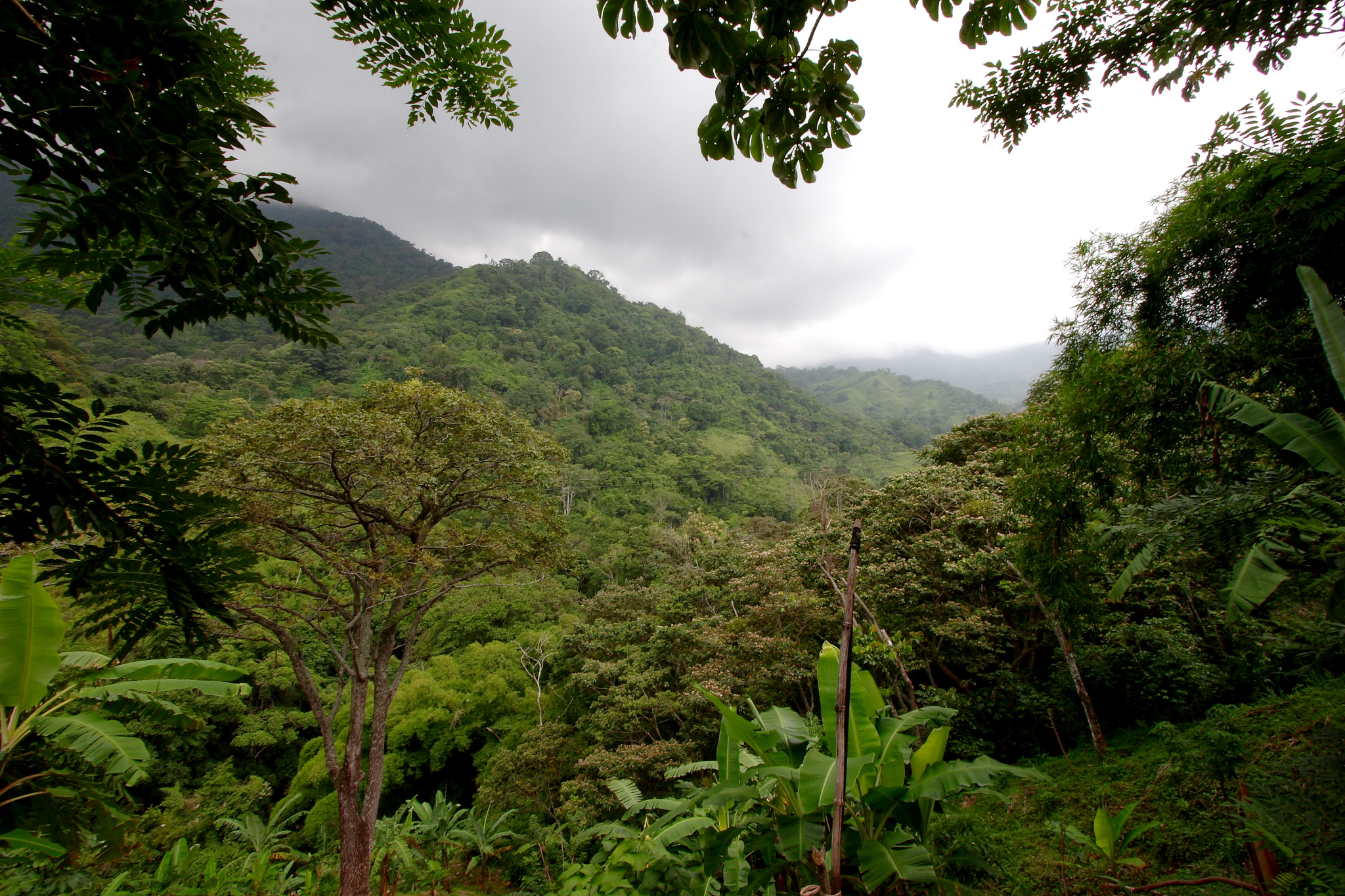 The Sierra Nevada Mountains in the Magdalena region of northern Colombia. Photograph by Mark Rowland