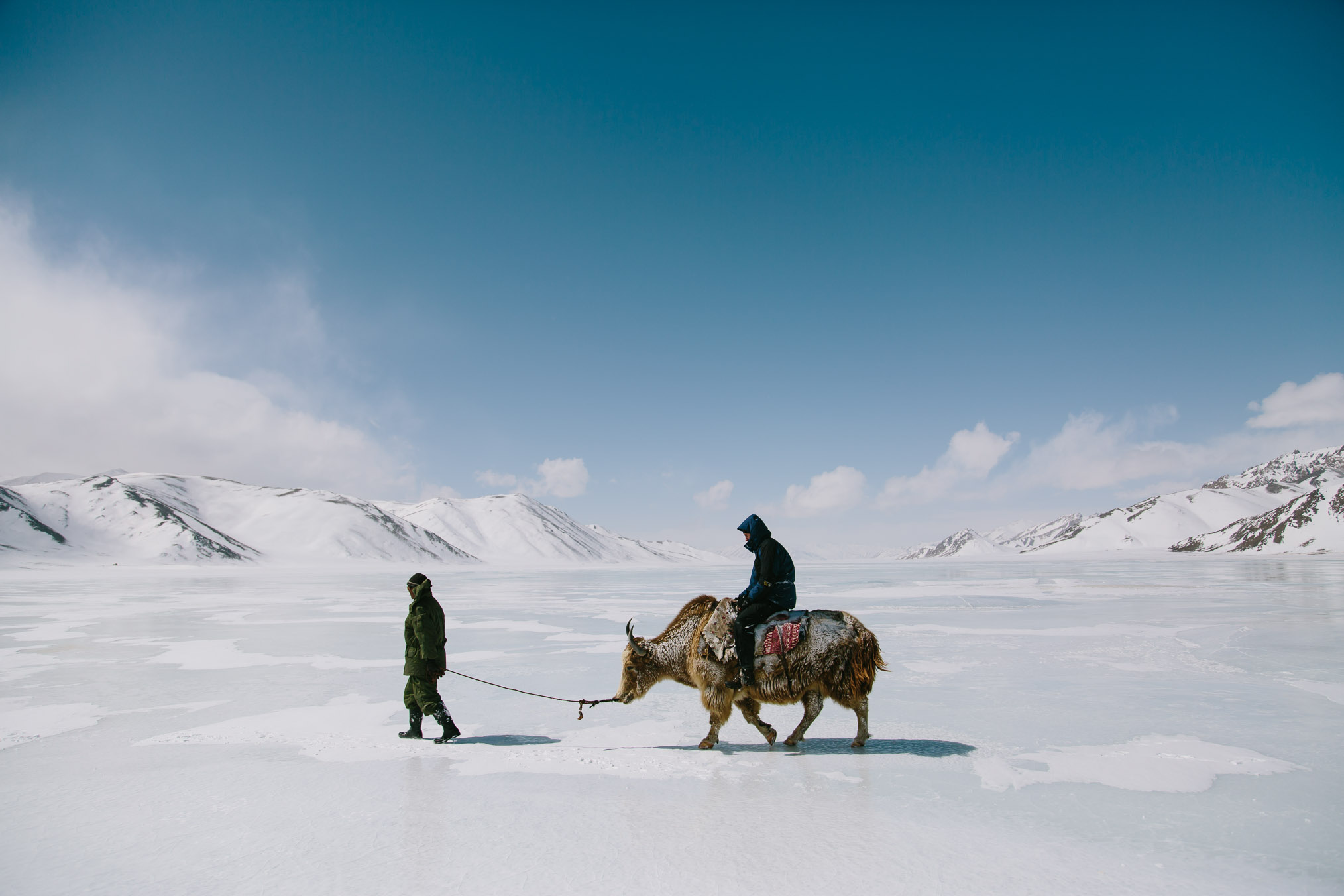 A Burgut ranger leads a yak ridden by one of the one of the Panthera biologists across the snow and ice. Photograph by Joel Caldwell