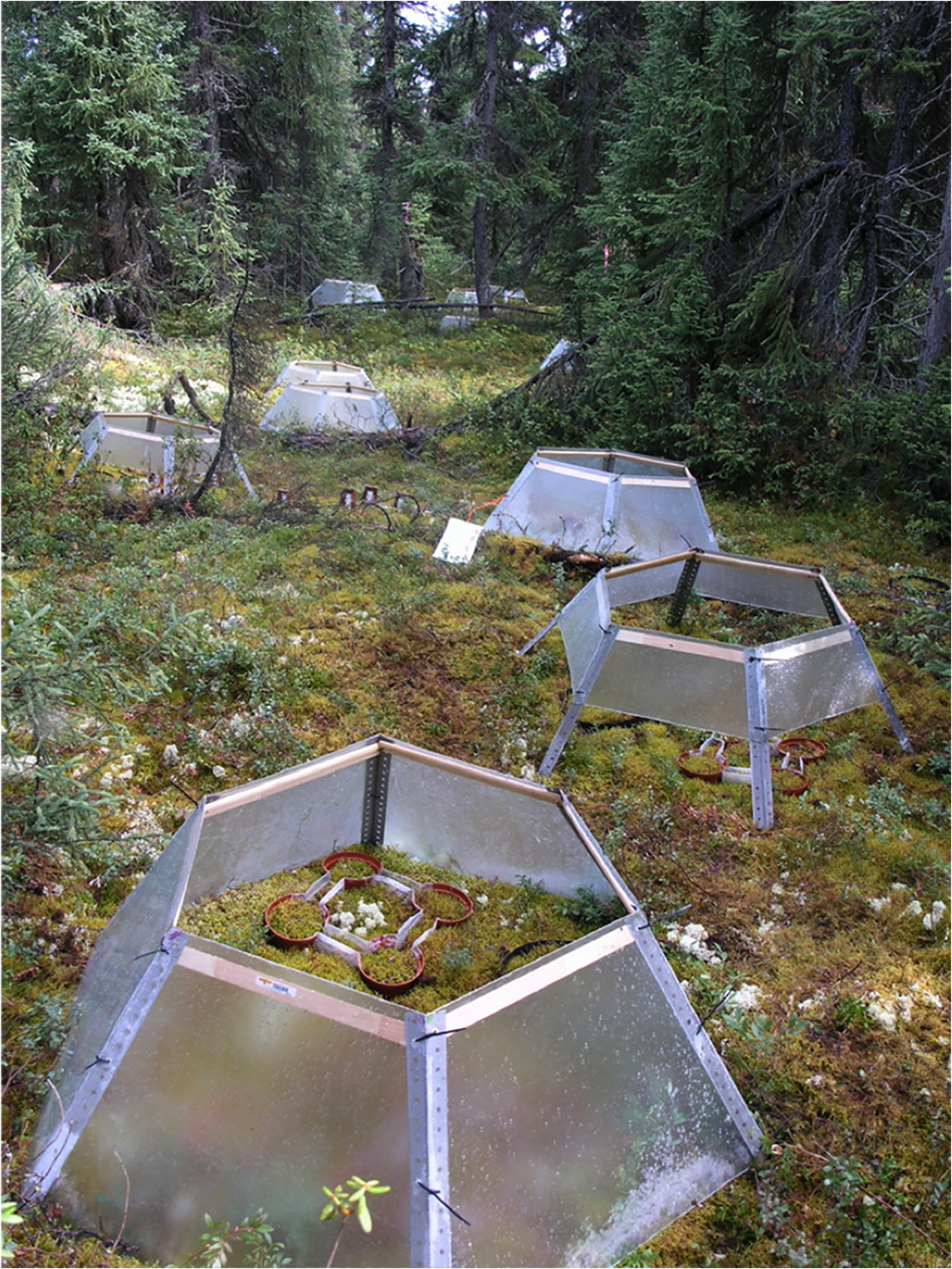 An experimental plot from Andy Gonzalez's connectivity research in the taiga of Canada's boreal forest—Photograph courtesy of Andy Gonzalez