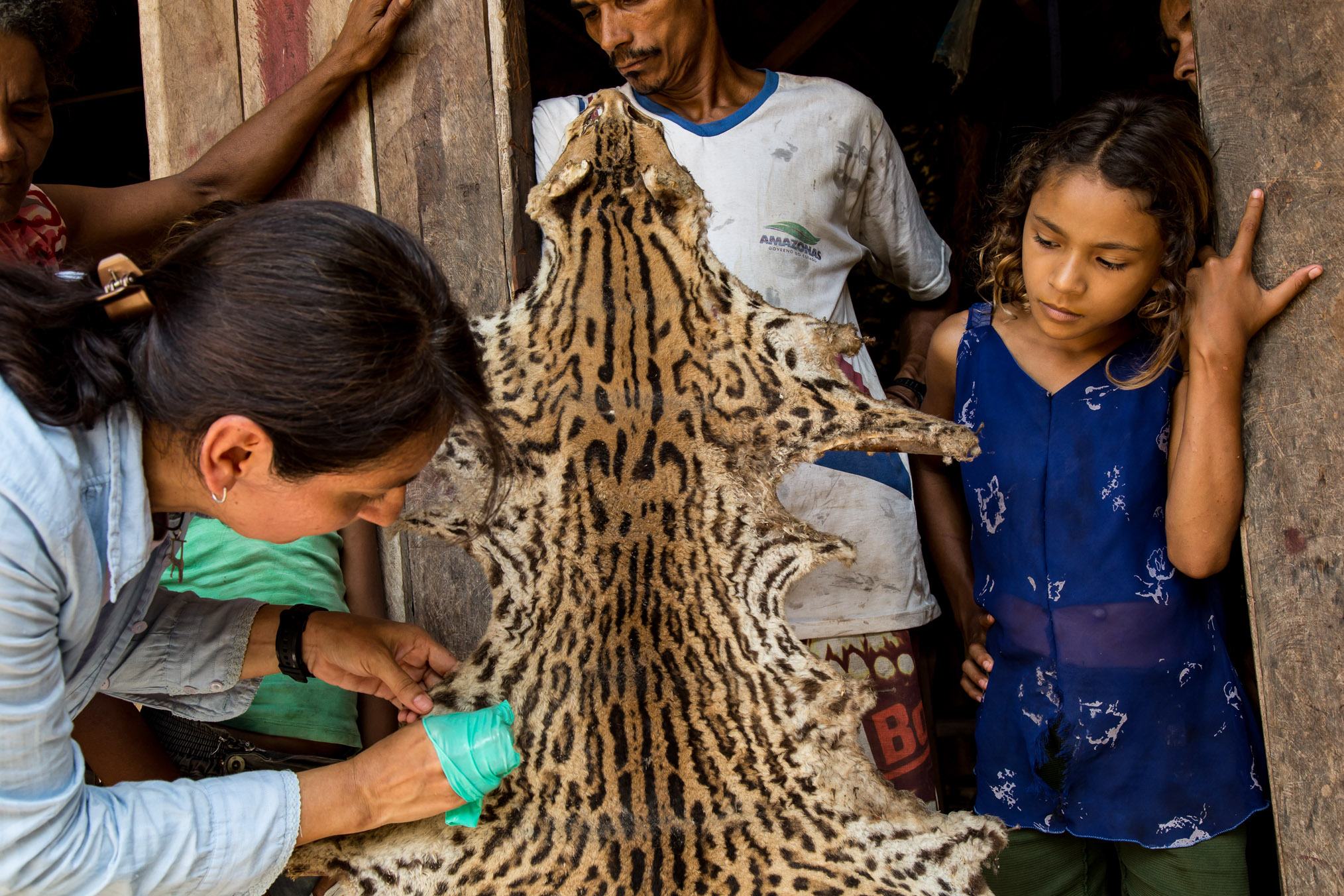 Alejandra Duarte takes a hair sample from a cat pelt. Some riberinhos live in isolated homes, eating only what they can hunt and grow.