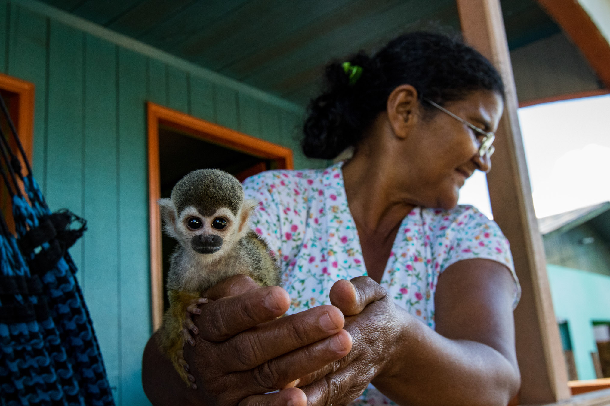 A community member in Eirunepé shows scientists her pet squirrel monkey (Saimiri boliviensis). Baby monkeys are often raised by villagers when their mothers are killed by hunters.