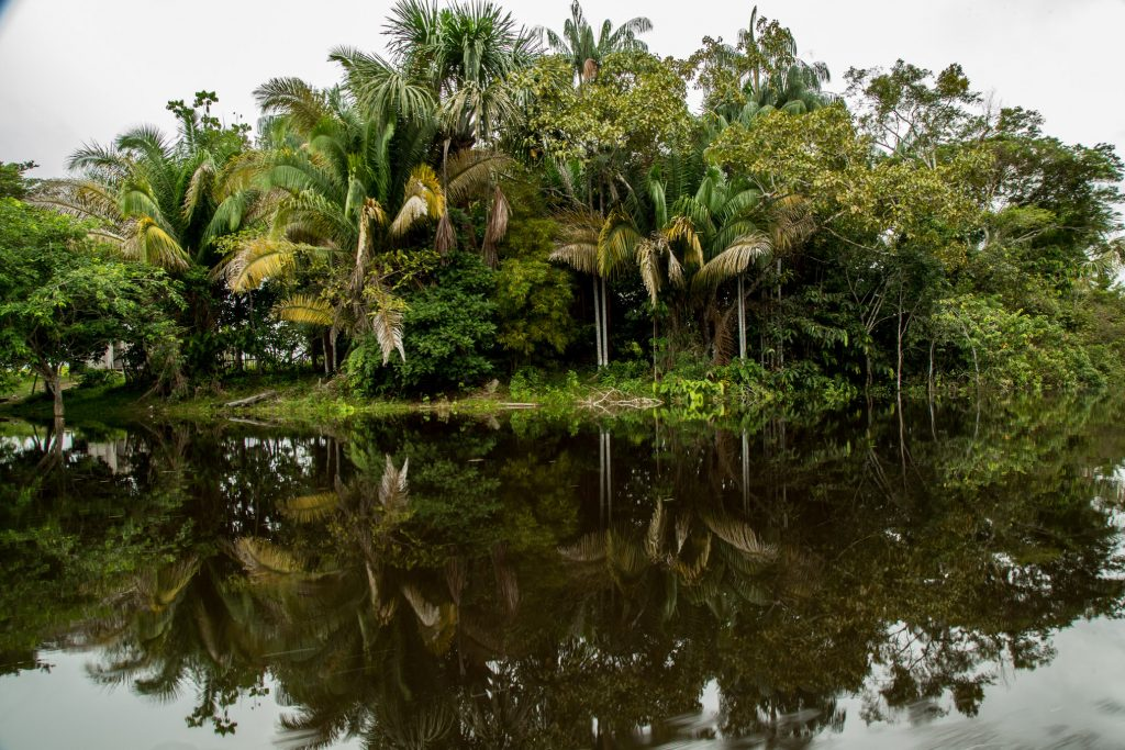 Palm trees line the banks of a black-water river outside of Eirunepé.
