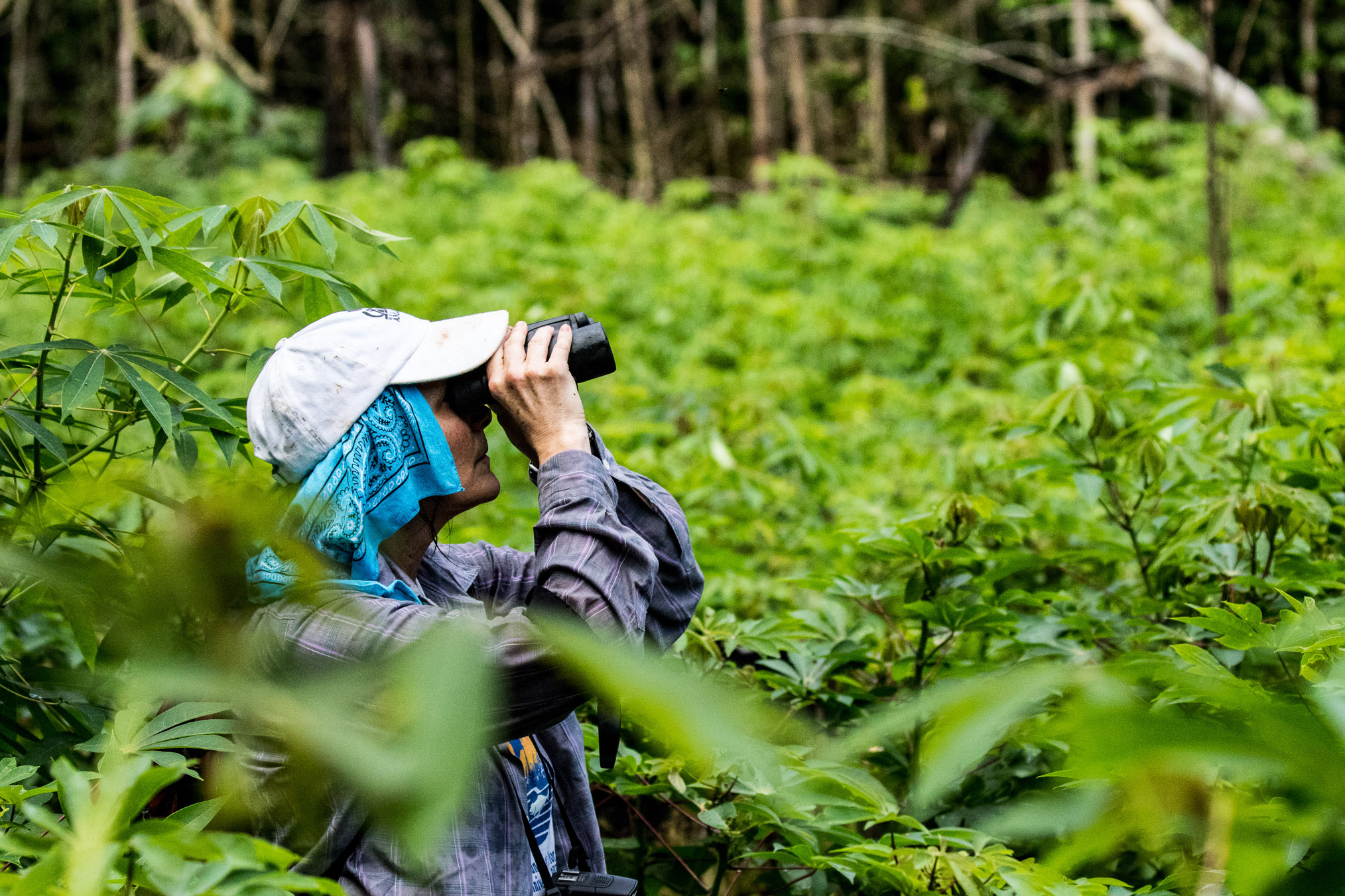 Laura Marsh looks for monkeys in the forest surrounding a manioc field a few kilometers from a village.
