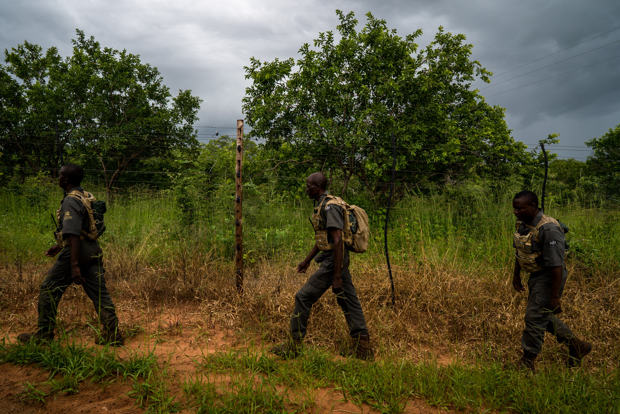 IAPF rangers on fence patrol—Photograph by Michael Hathorn, Ginkgo Agency