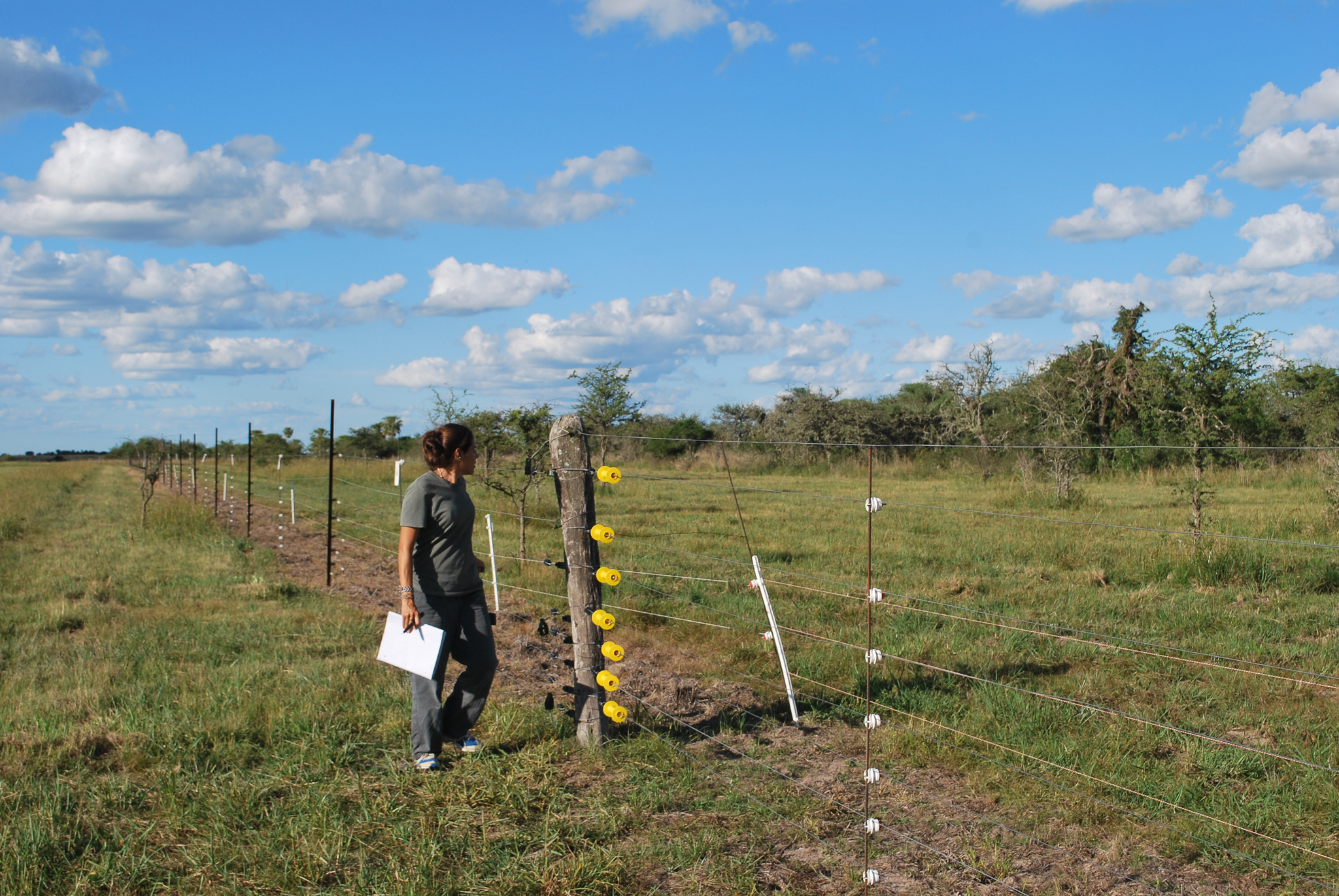 "Noelia Insaurralde checks an electric fence. One group of relocated pampas deer quickly left the reserve, straying onto nearby ranches, so they were recaptured and are being kept in pens to allow them time to habituate to the region. When fawns are born here, says Di Martino, ""they will not yearn for elsewhere.""—Photo by Brooke Jarvis"