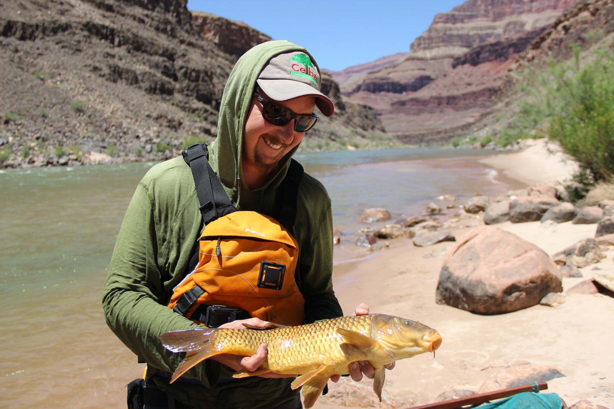 Fish biologist Adam Barkalow admires an invasive carp, one of the few non-native species capable of surviving in the challenging conditions in the Grand Canyon.