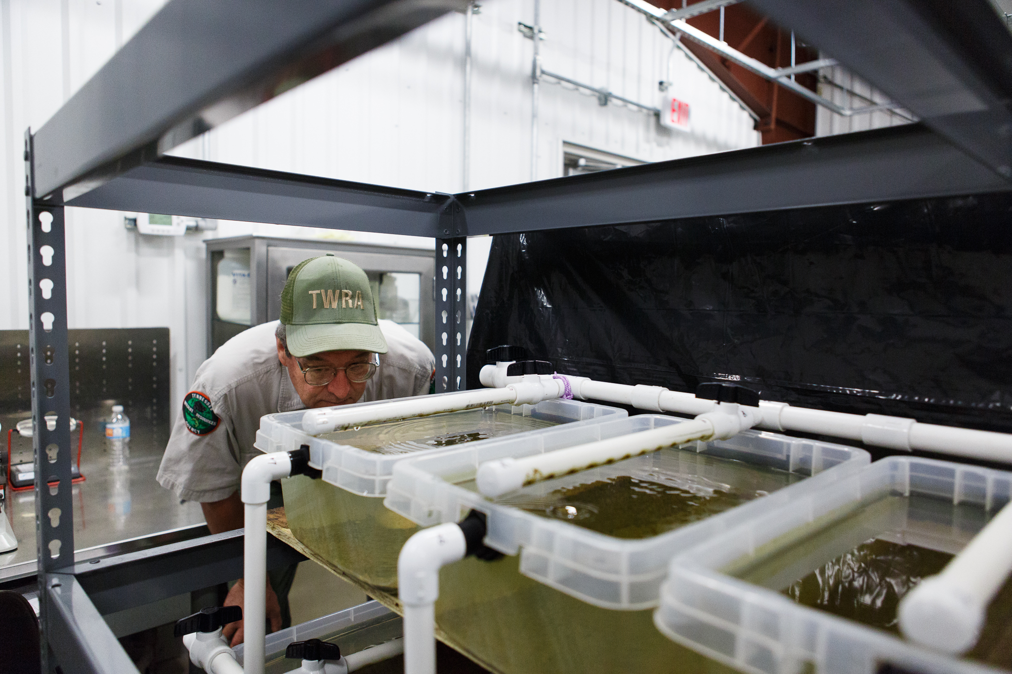 David Sims inspects juvenile mussels housed in a row of culture tanks in the Cumberland Aquatic Center. Photograph by Kathryn Whitney