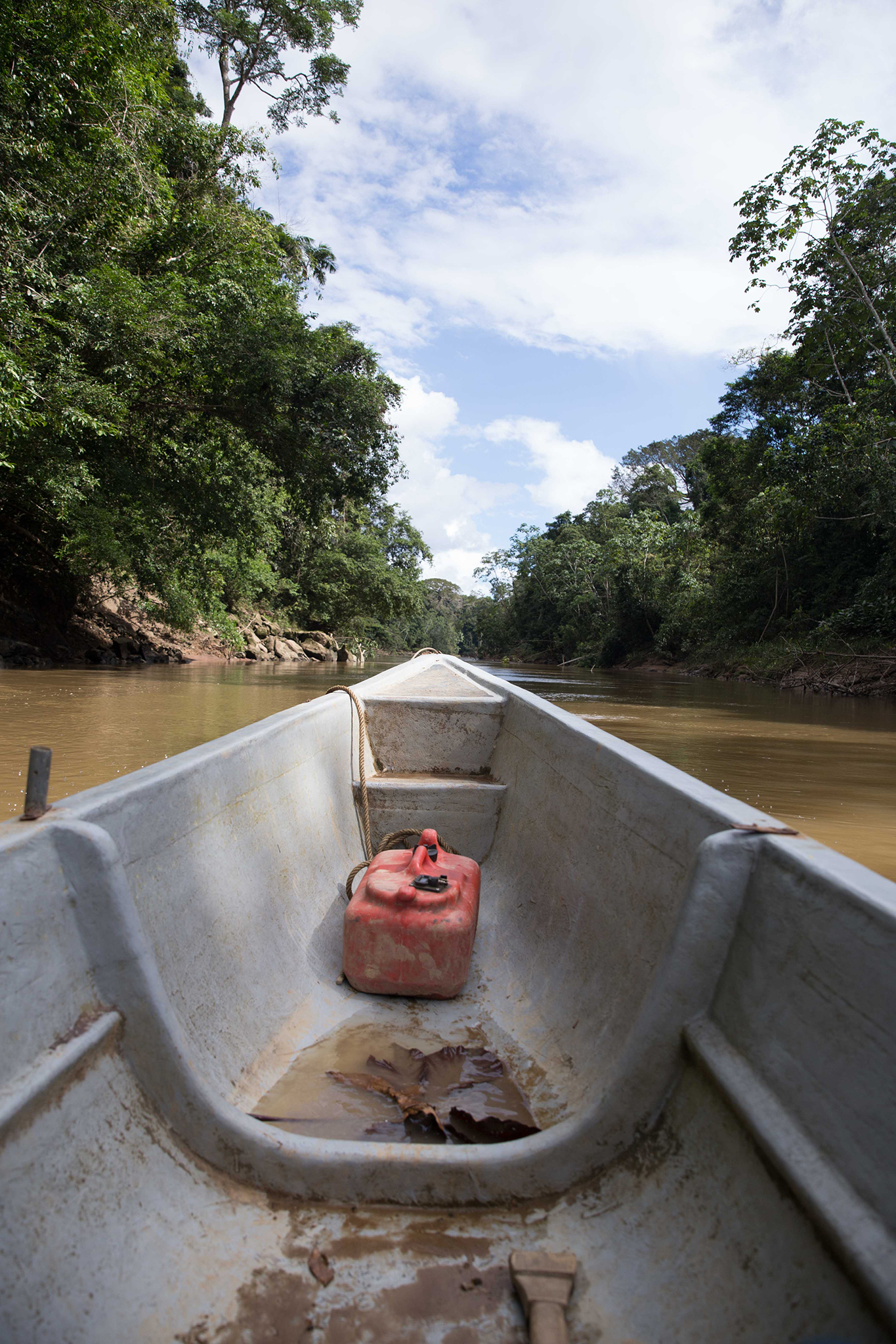 A view from the boat on the Shiripuno River in Yasuní National Park