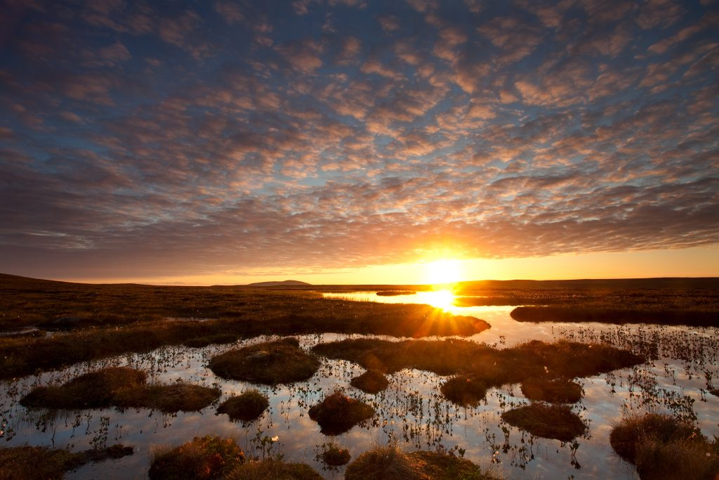 Pools and bog peatland at dawn, Flow Country, Scotland