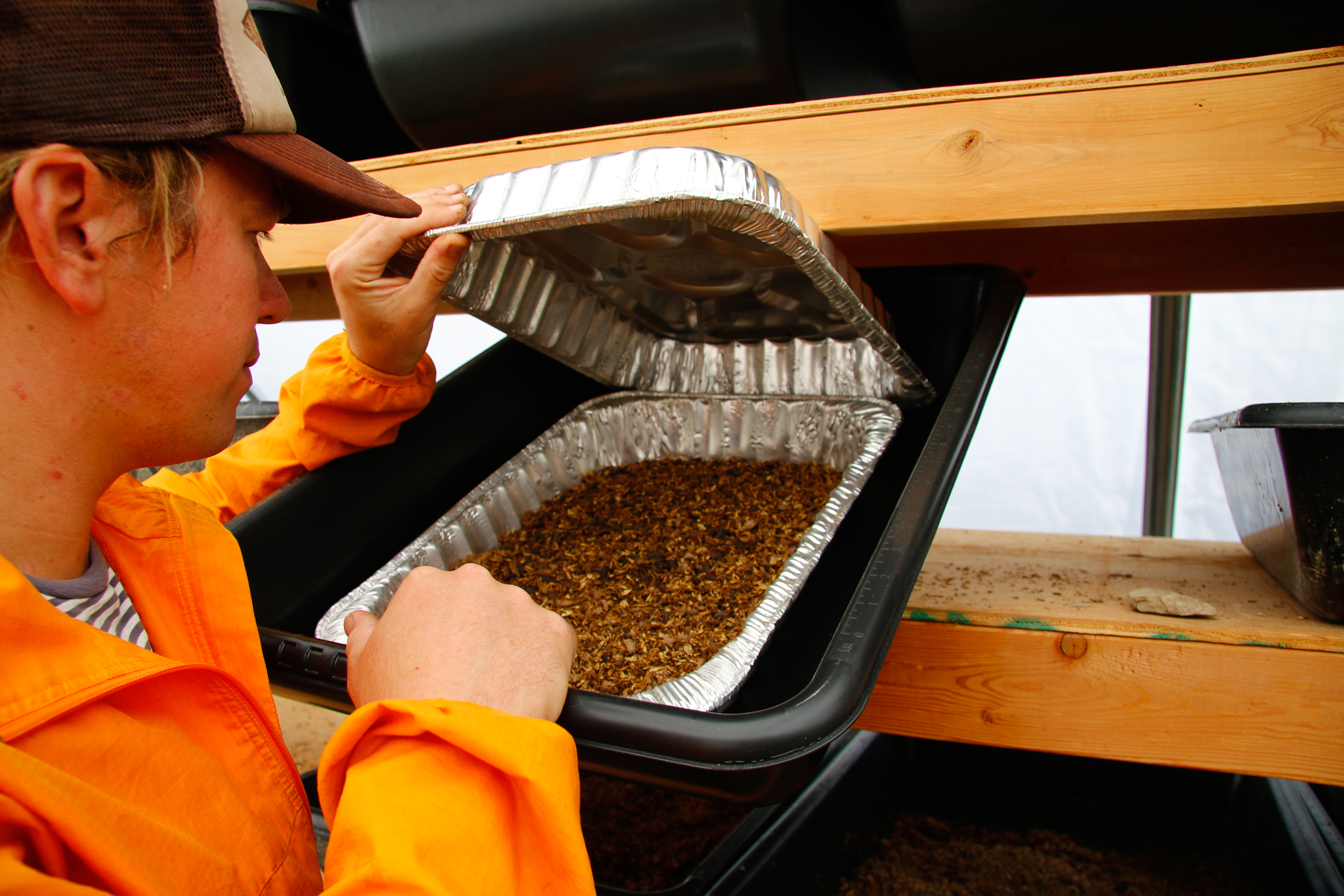 Phil Taylor peers inside one his maggot bins to gauge their progress breaking down grain waste from a local brewer and converting it into high-density protein.