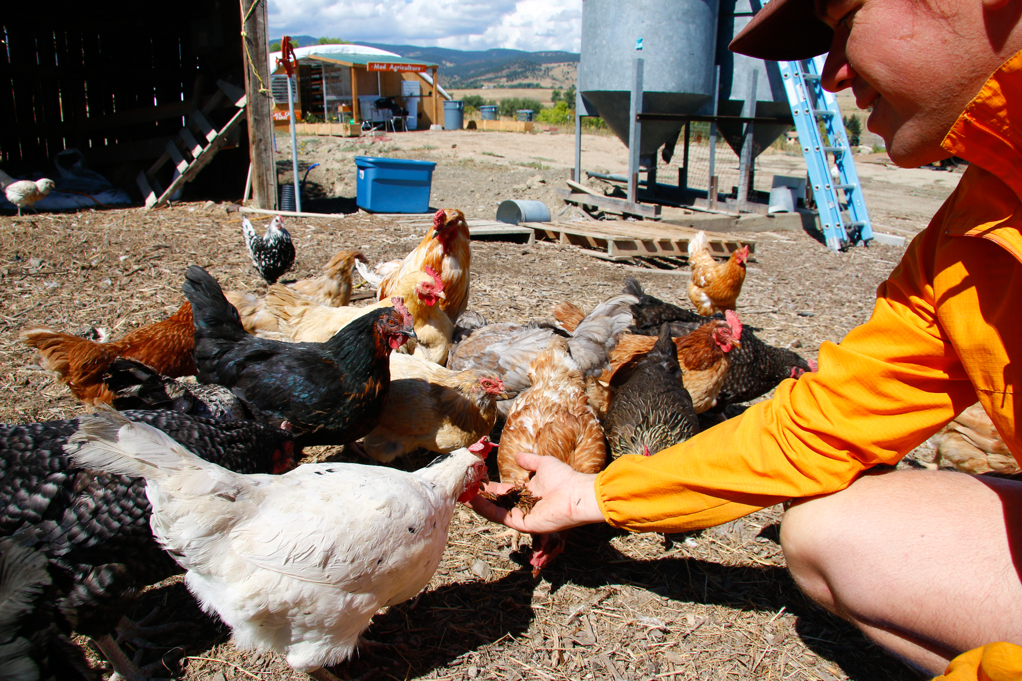 In the comings months, Phil Taylor will launch poultry feeding trials in partnership with the University of Colorado Boulder.