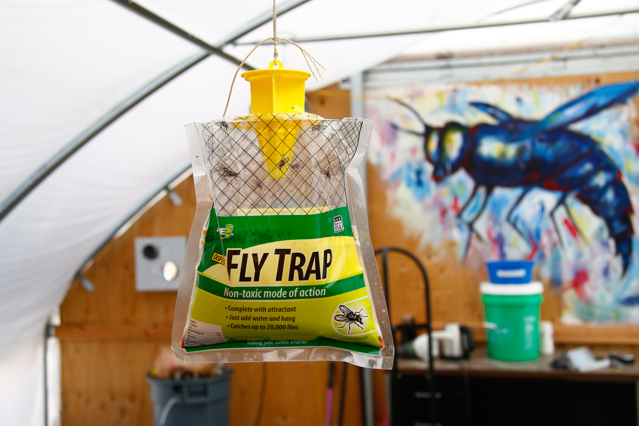 Despite the apparent irony of a fly trap in a fly-producing facility, Phil Taylor doesn't want house flies mixing in with his livestock. Unlike black soldier flies, house flies carry disease.