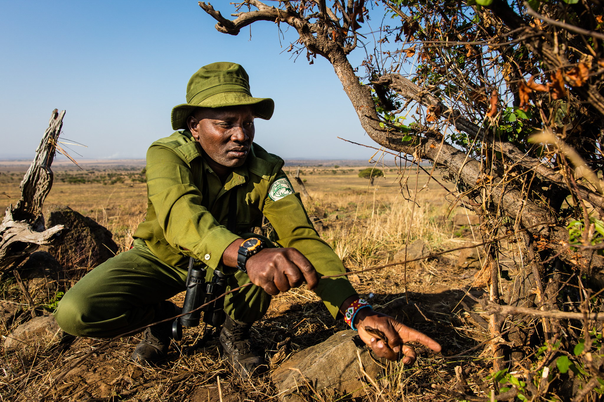The AKTF team spends much of its time searching for and removing snares from inside the Masai Mara National Reserve. Although the snares are set primarily to catch herbivores they are indiscriminate killers, trapping lions, leopards, and other predators.
