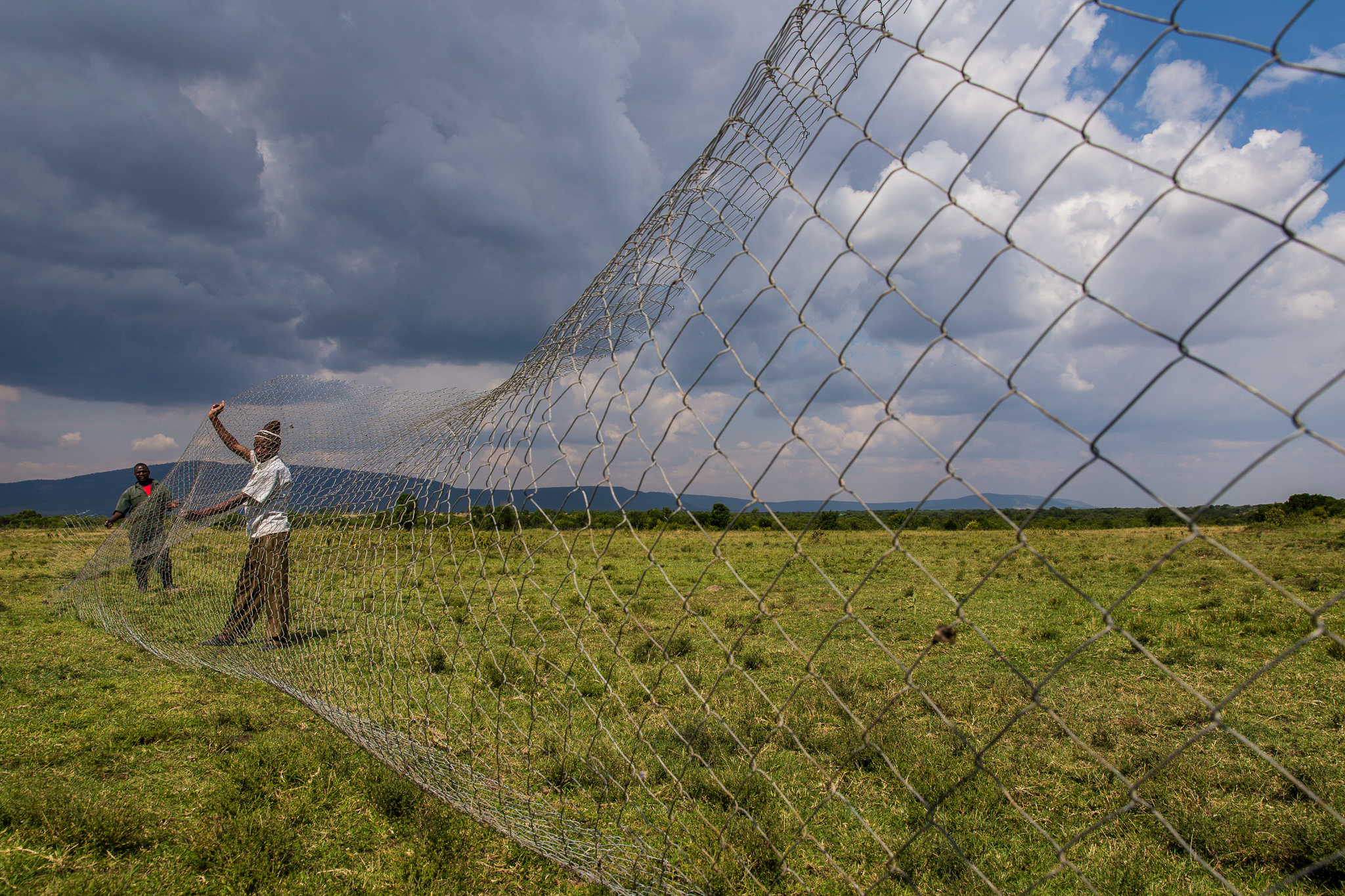 Workers stretch out the chain-link fencing for Pilot's new <em>boma</em>. The construction process typically takes two days, one for setting the posts in cement, and another for attaching the fencing.