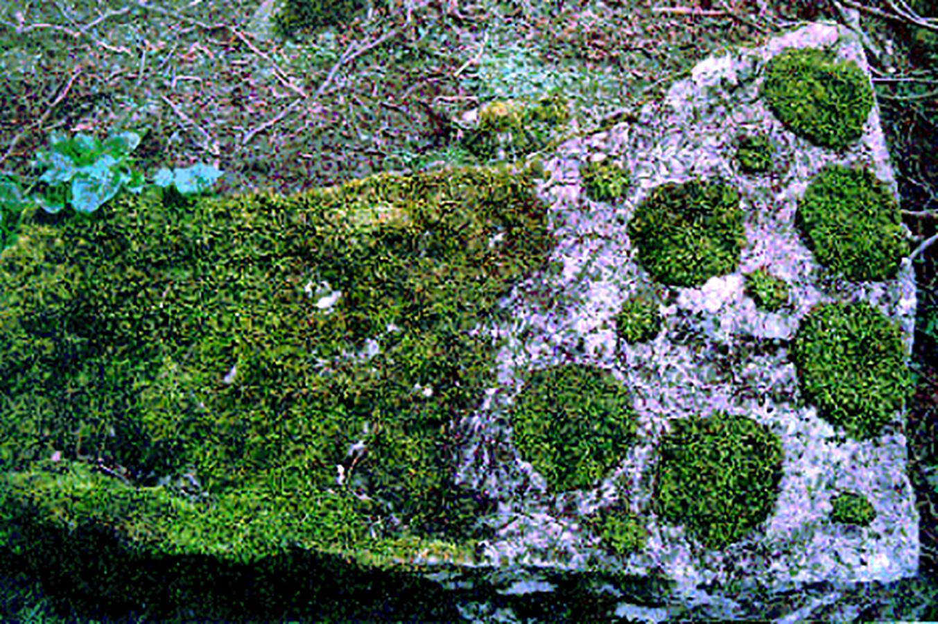 A test plot of fragmented moss habitat—Photograph courtesy of Andrew Gonzalez