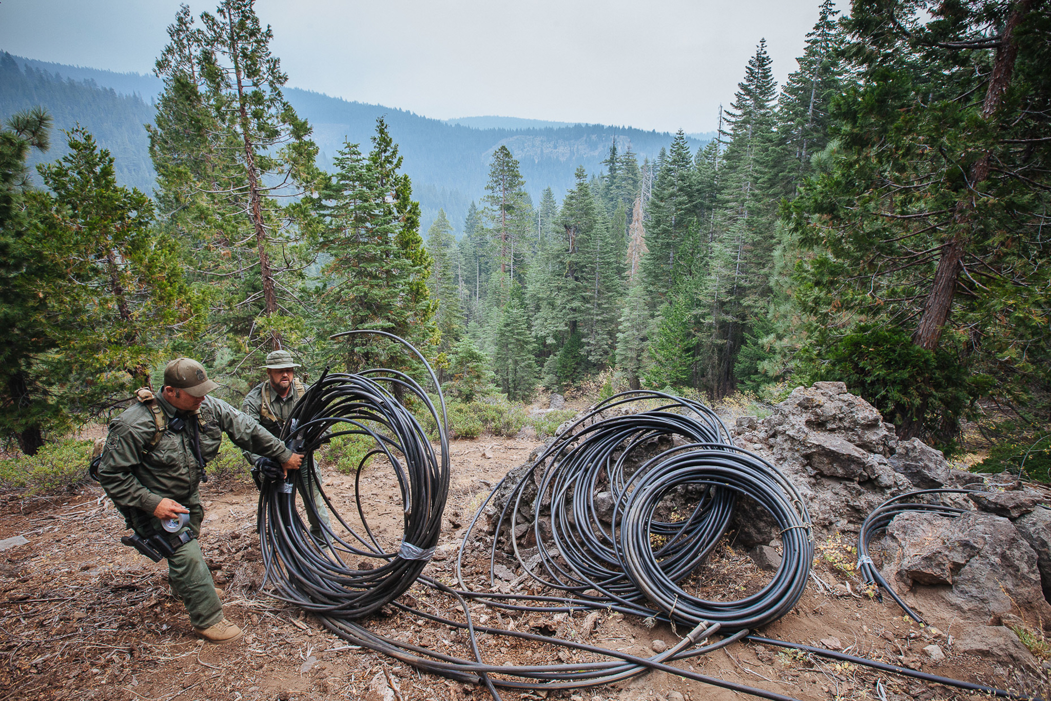 Law-enforcement officers pile coils of irrigation tubing used in marijuana grows. A recent study estimated that water theft for marijuana grows is equal to some 430 million liters per square kilometer of crop, roughly the same amount of water needed per acre in an almond orchard.