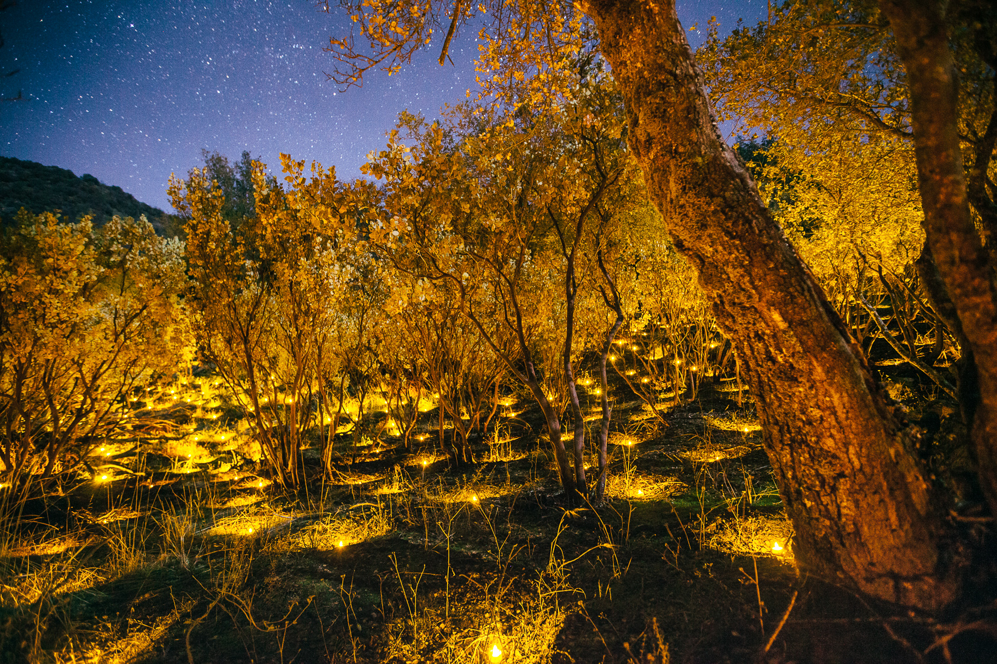 Electric tea lights illuminate the placement of plants in a marijuana grow in Sierra National Forest.