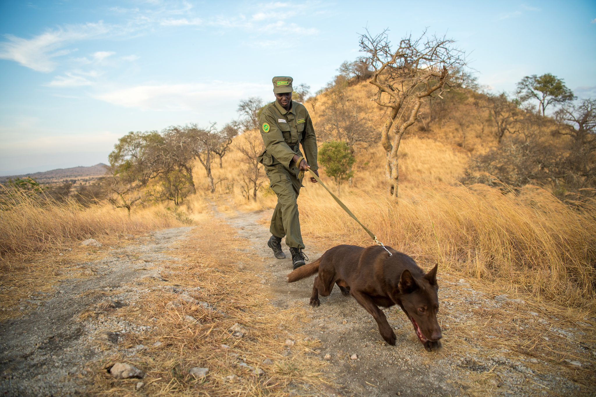 Dogs, working with their Maasai handlers, are helping to keep wildlife and people safe in northern Tanzania.