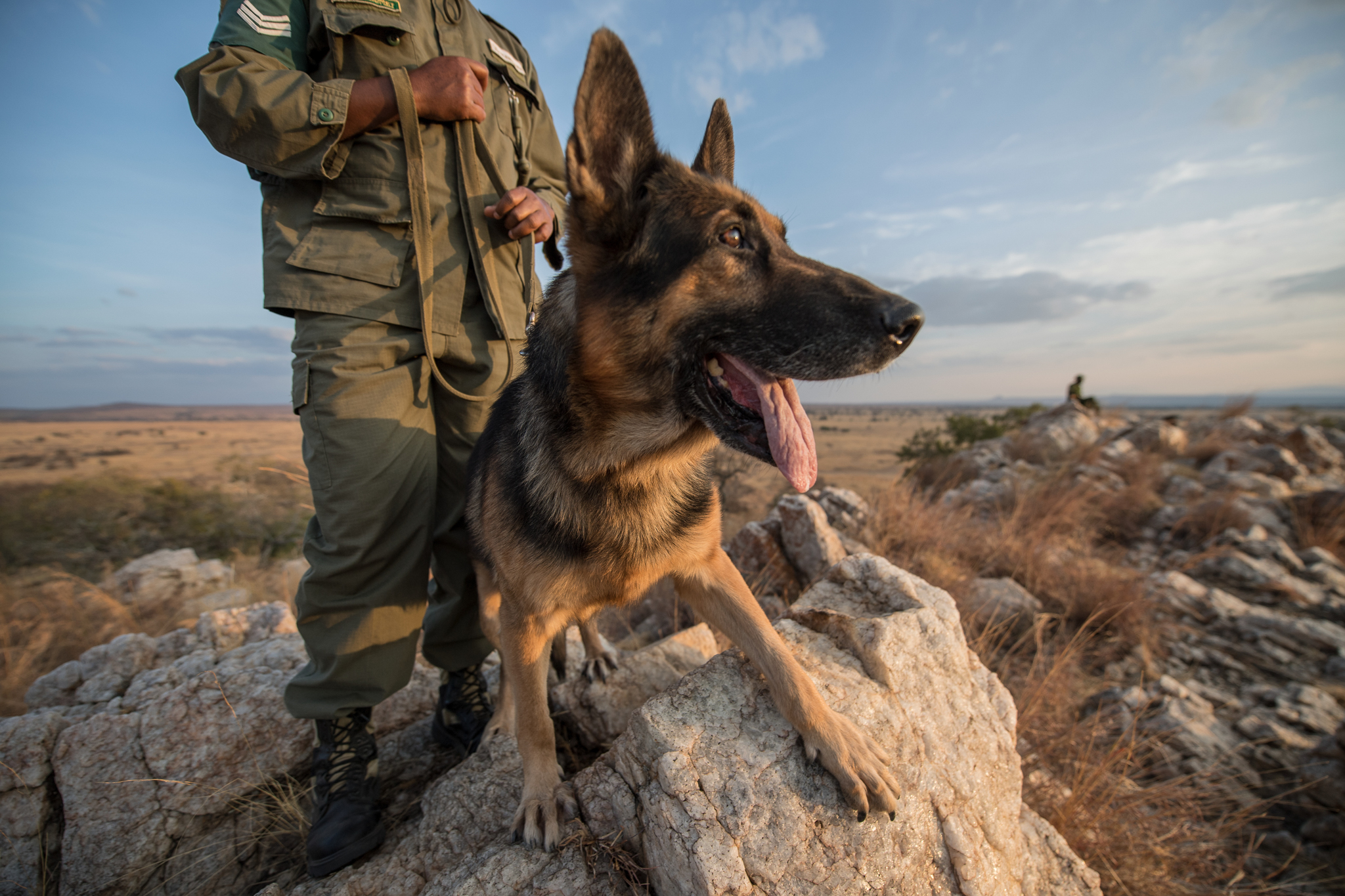 Rocky is the star of the Big Life Tracker Dog Unit, an elite Tanzanian anti-poaching team of four dogs and six handlers.