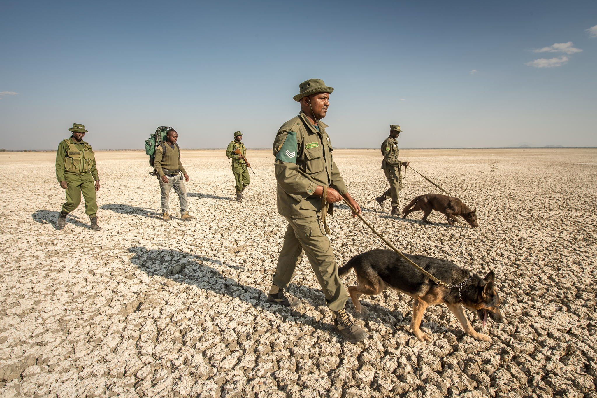 Handlers and dogs endure the heat on the salty embankment of Manyara Lake near the ranch.