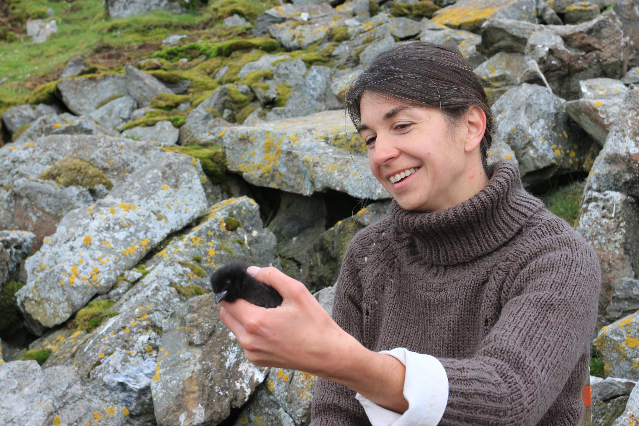 Ornithologist Katarzyna Wojczulanis-Jakubas holds a one-week-old little auk chick. The adult birds build nests in rocky crevices and line them with pebbles to keep the eggs up off the soggy ground. Photograph by Hannah Hoag