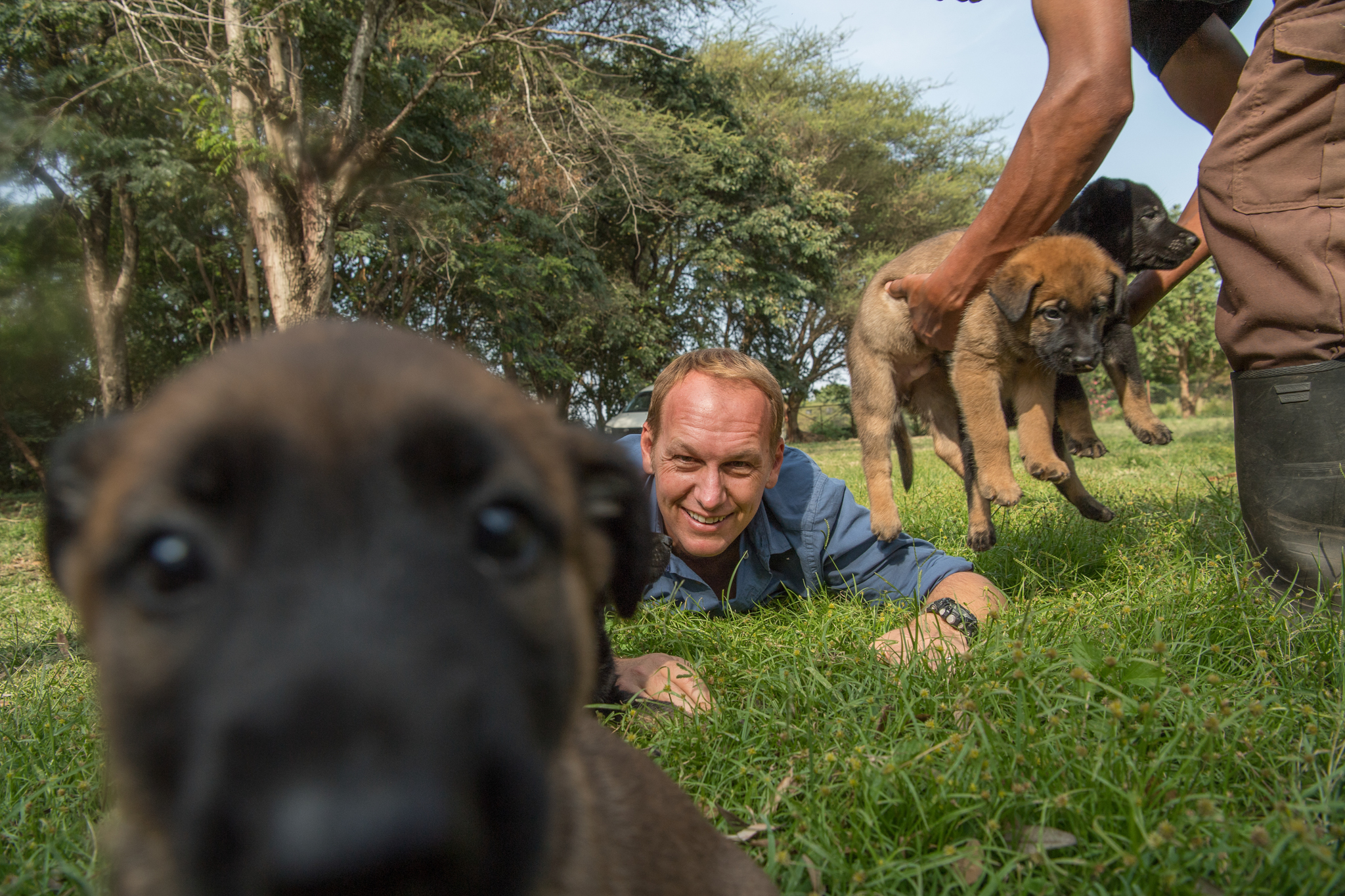 Will Powell, African Wildlife Foundation's Conservation Canine Director in Tanzania, snuggles a litter of puppies. These puppies will become tracker dogs and will help in efforts to fight poaching.