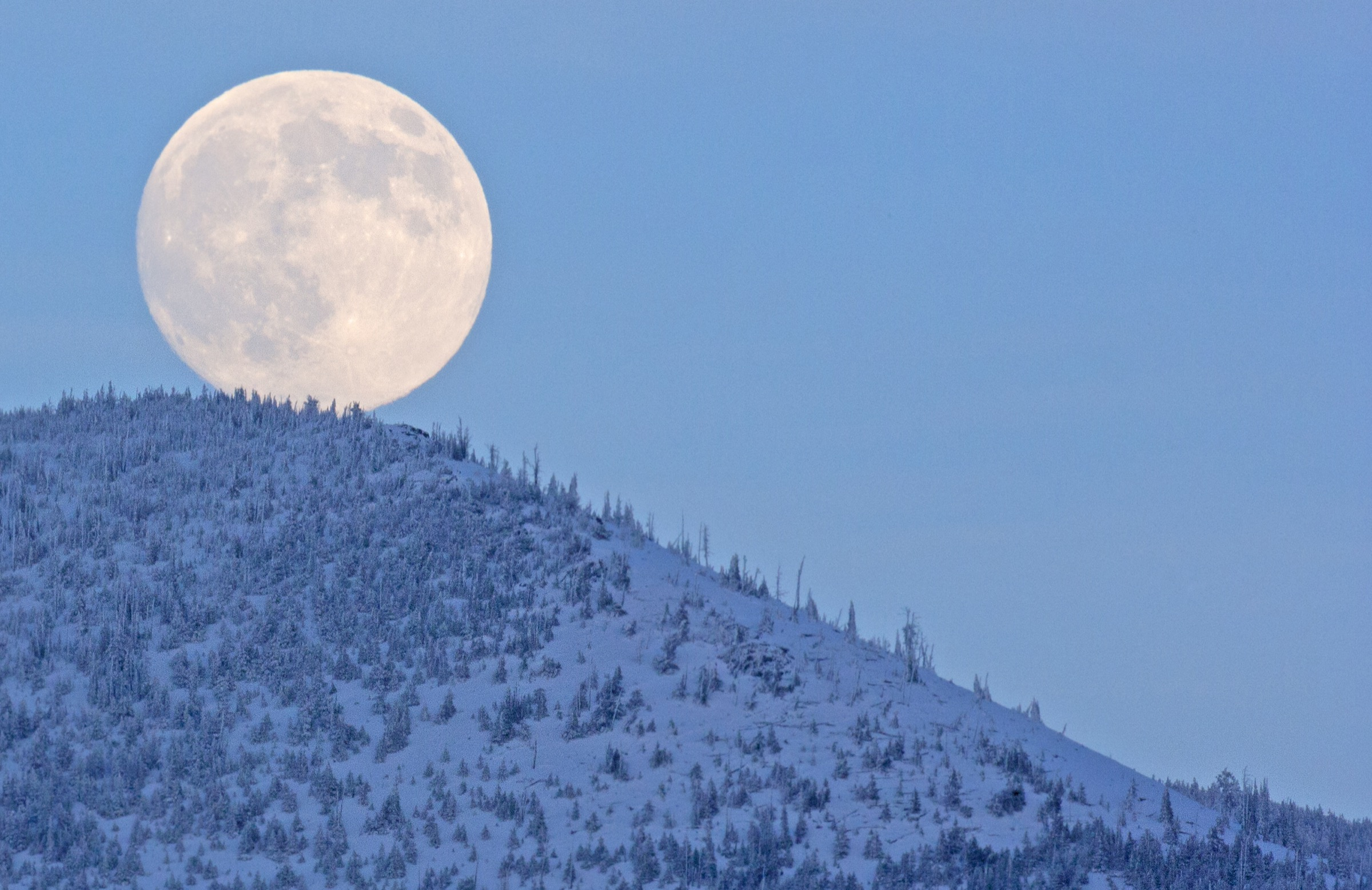 Moon rises over the research site in Montana's Bob Marshall Wilderness Area. Late winter marks the onset of mating season in this strictly nocturnal flying rodent.