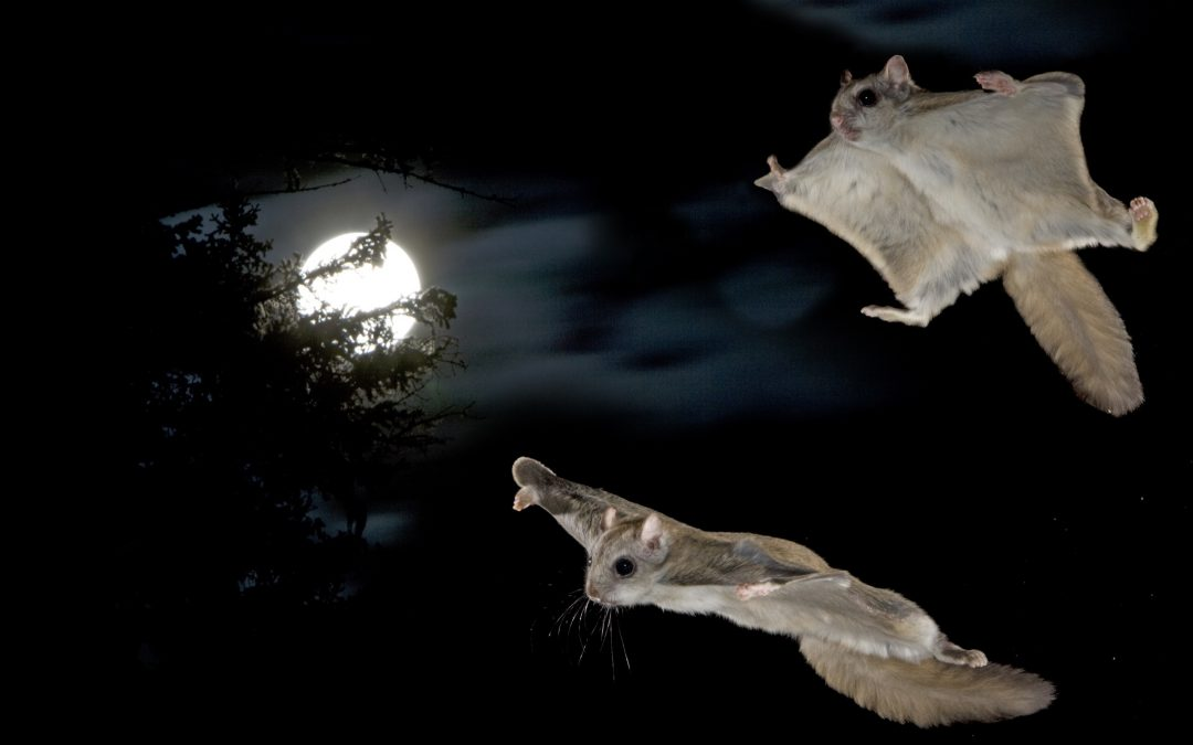 Moonlight Gliders
