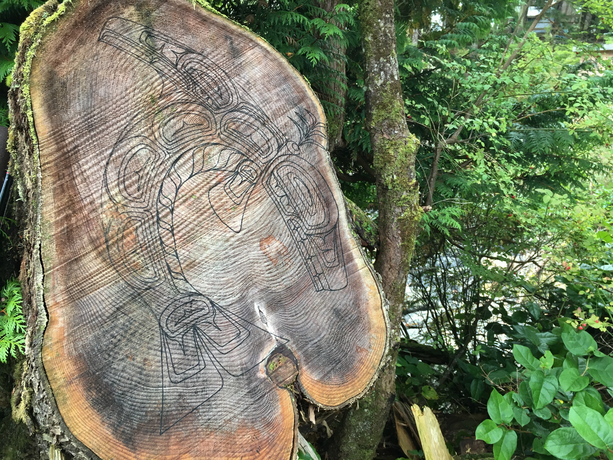 Artwork drawn with a Sharpie pen on the cut end of a tree trunk along a trail at Cetacea Lab, a remote whale research station