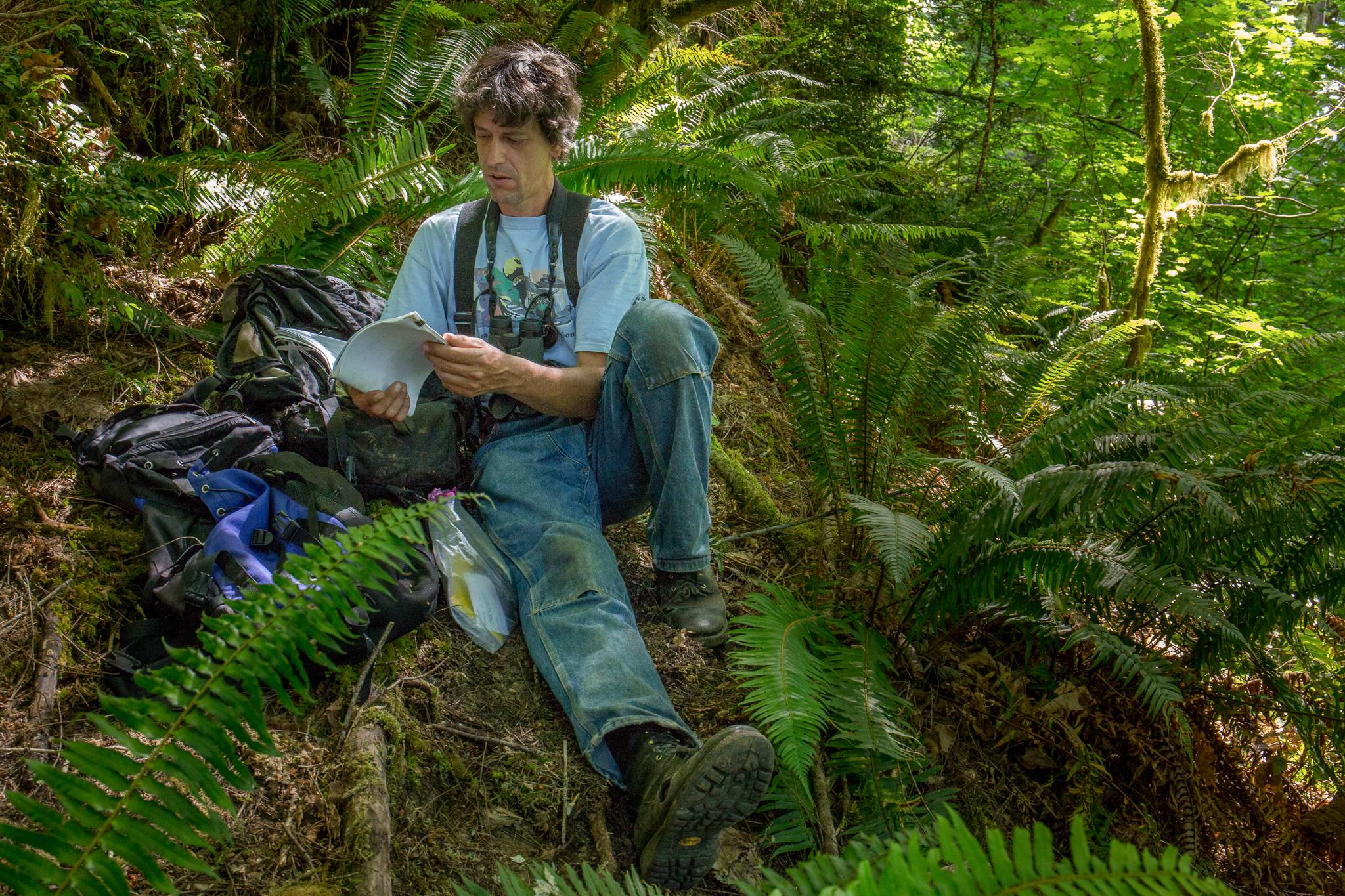 Oregon State University research assistant Chris McCafferty checks his field notes at a northern spotted owl nest site.
