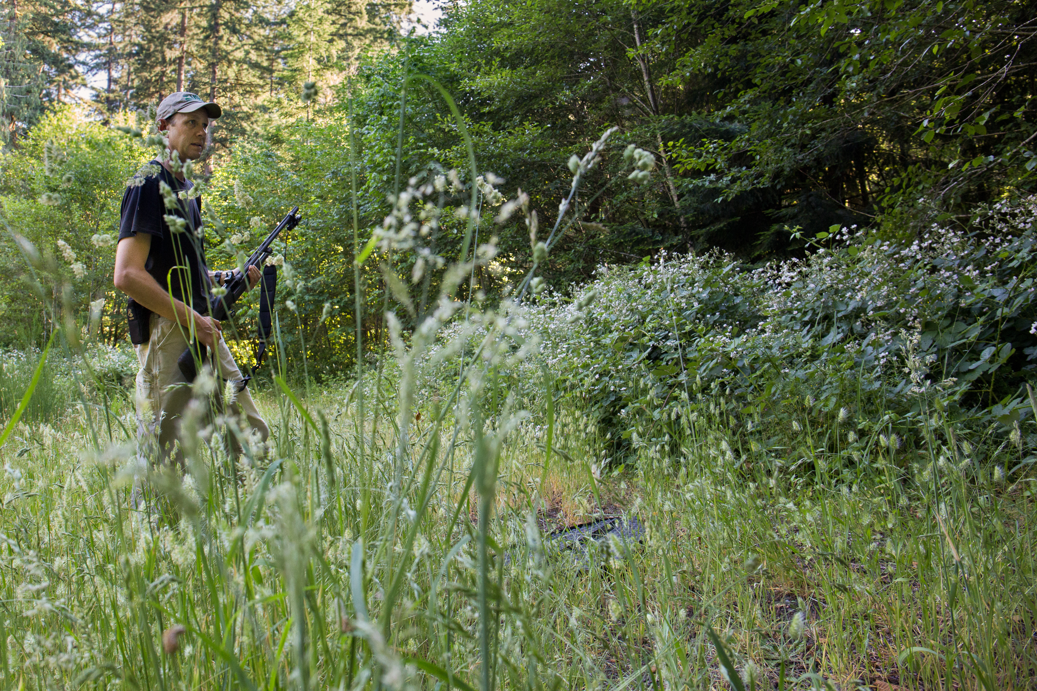 USGS biologist David Wiens stands at the edge of a clearing with the specially outfitted shotgun he uses to remove invasive barred owls from what was historically spotted owl habitat.