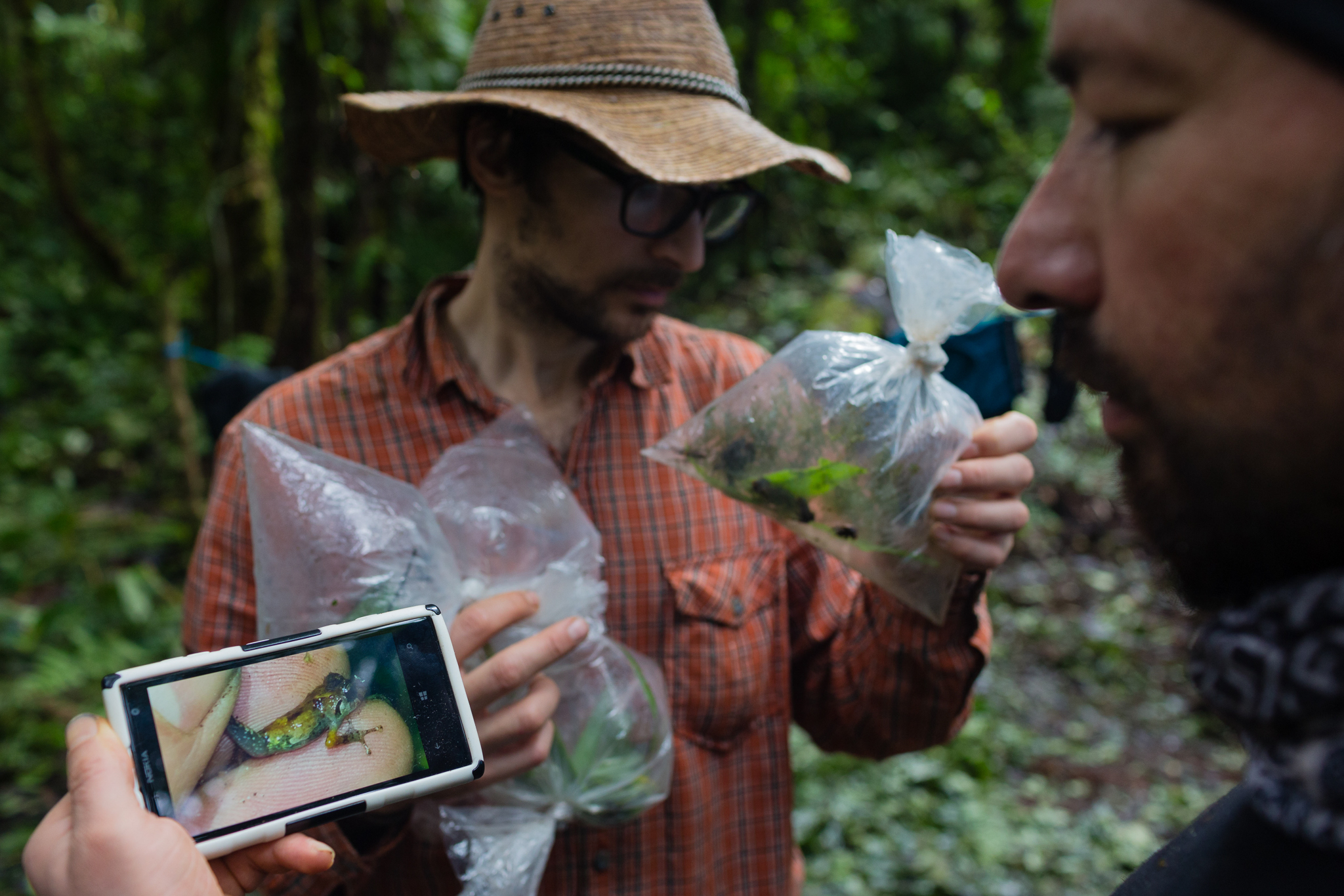 José Padial and Peruvian biologist Juan Carlos Chaparro examines specimens of a potential new species of frog just collected. Photo by Andy Isaacson.