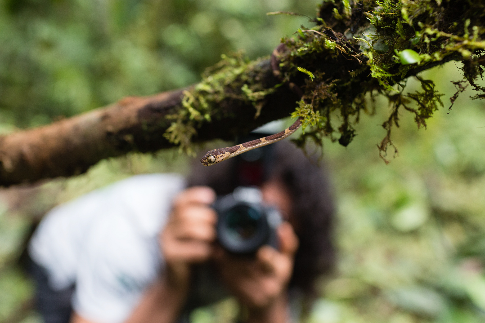 Peruvian biologist Giussepe Gagliardi photographing an arboreal snake (Imantodes cenchoa) during one of the daily specimen photo sessions. Photo by Andy Isaacson