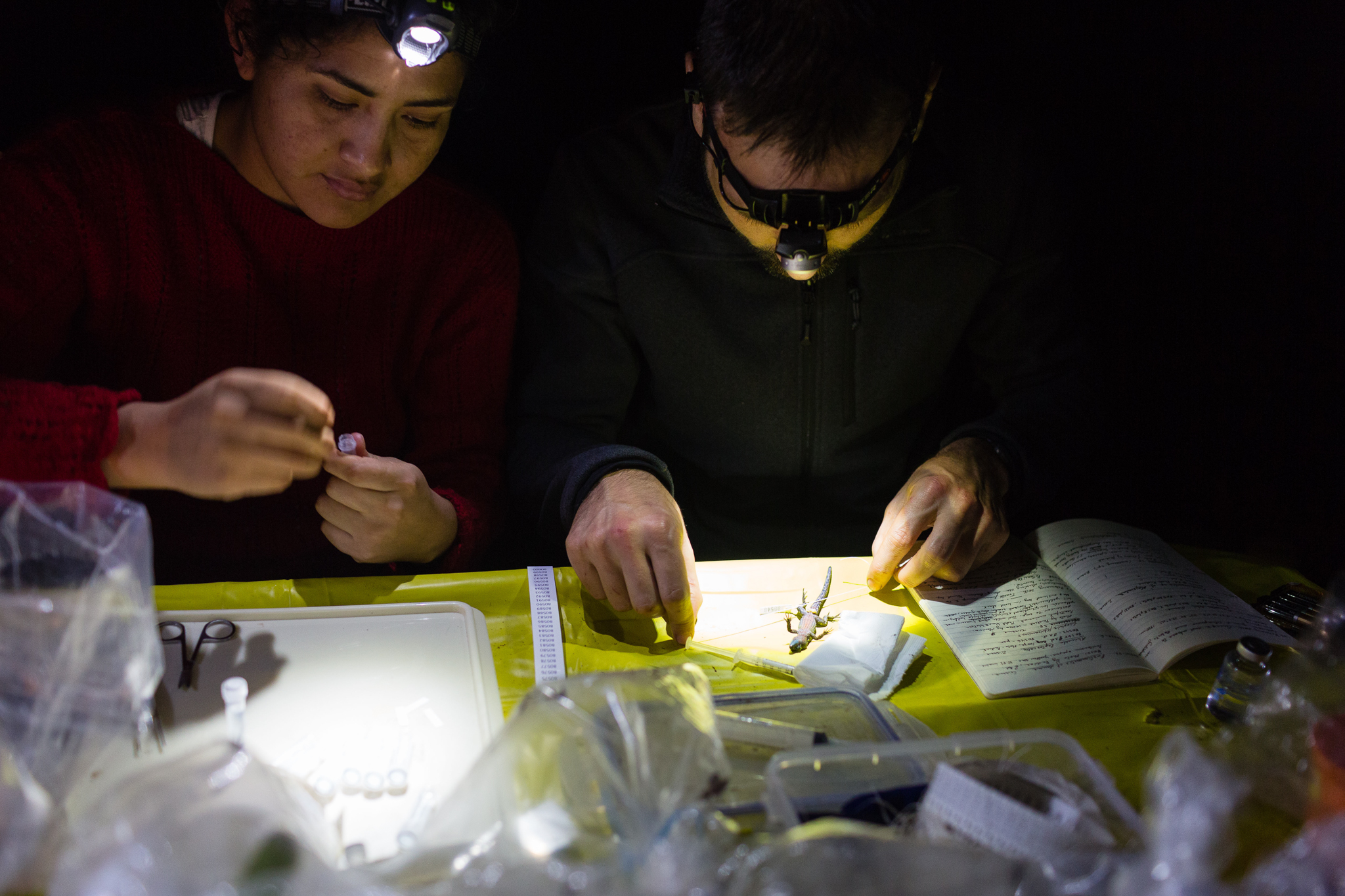 Dr. Santiago Castroviejo and Peruvian biologist Liz Gomez process specimens at the lab table at Camp 2. Photo by Andy Isaacson