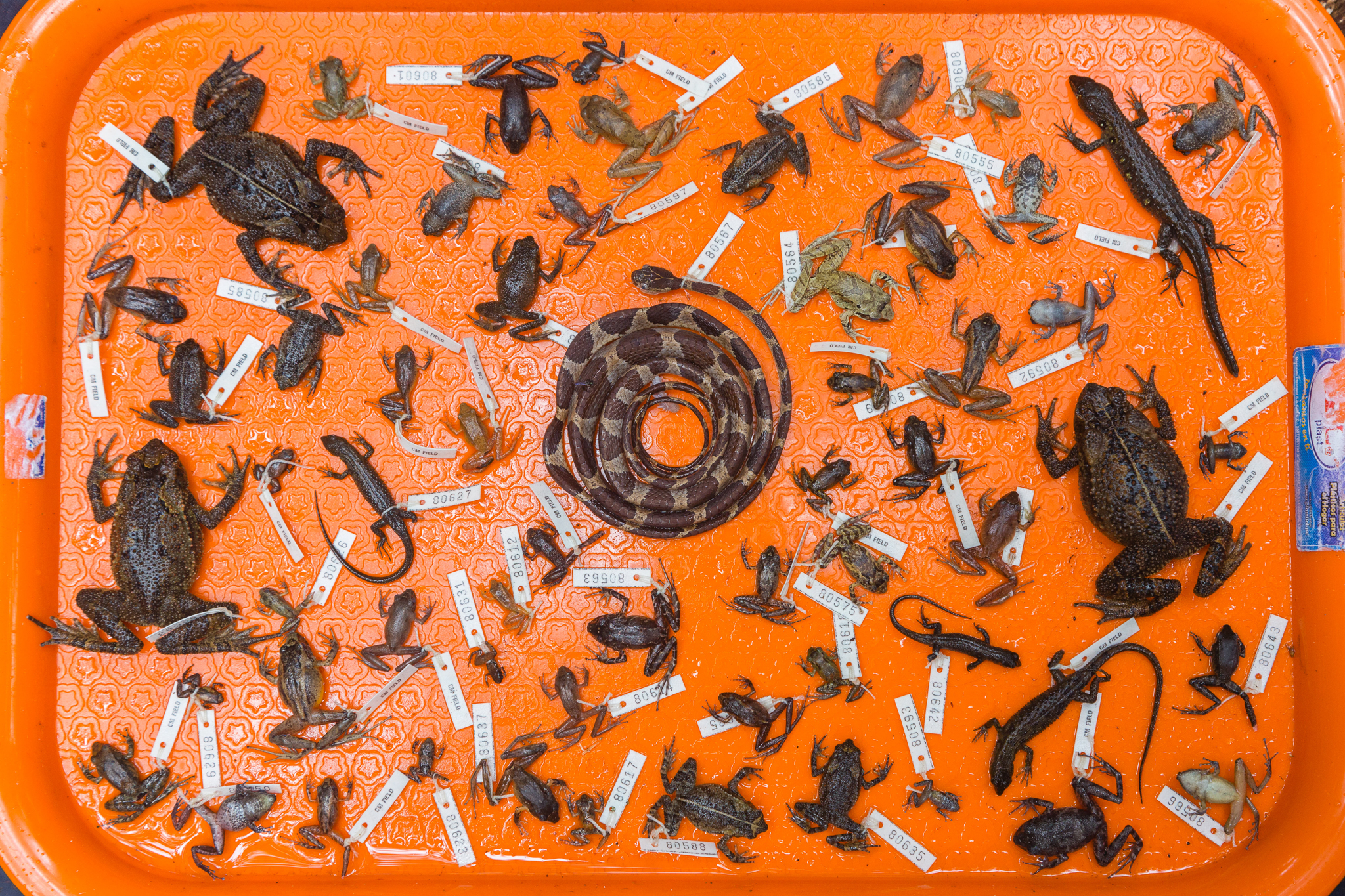 A tray of specimens collected during the expedition. Photo by Andy Isaacson