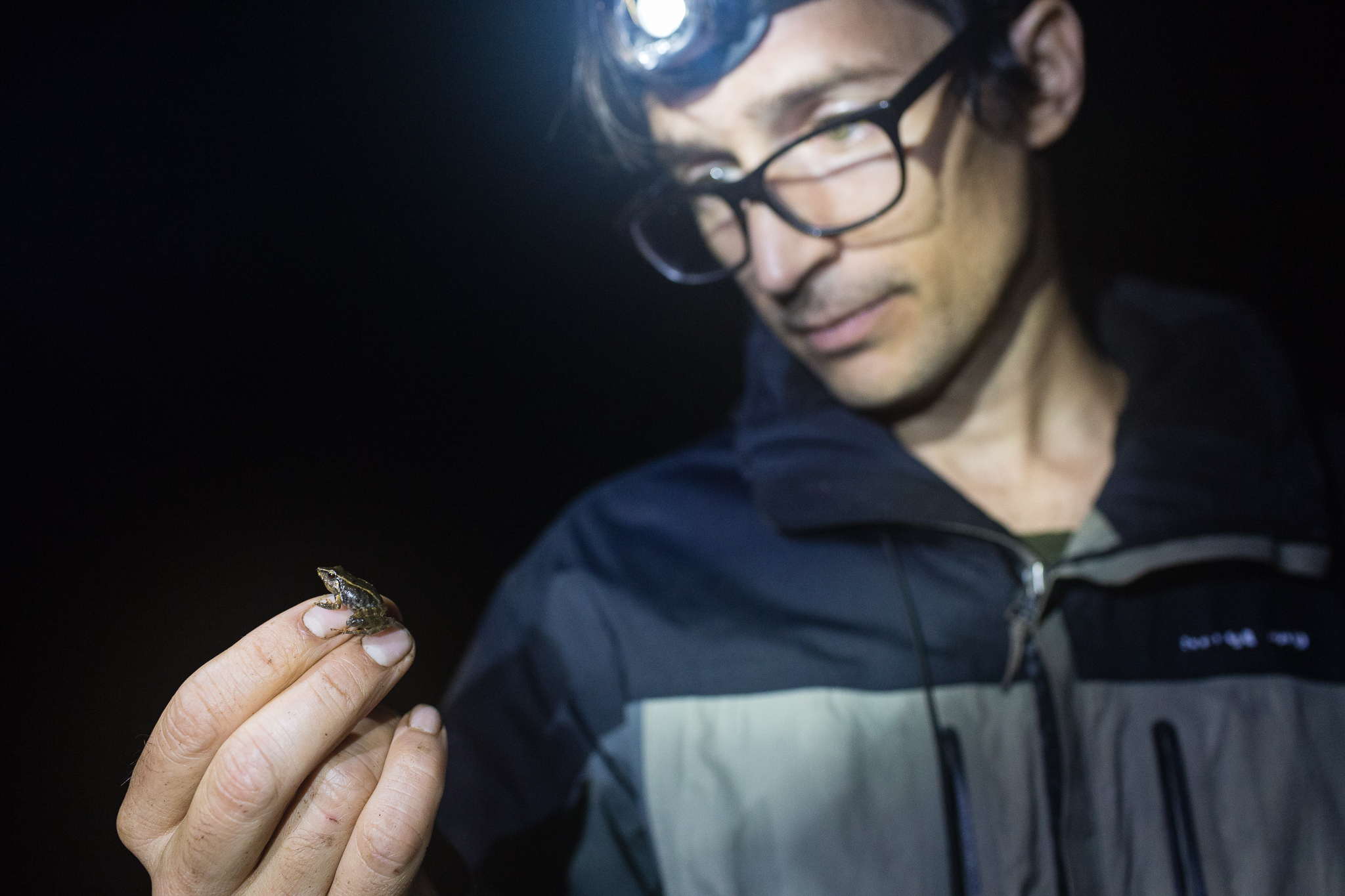 José Padial holding a common Terrarana frog (Pristimantis rhabdolameus) found between Camps 2 and 3. Photo by Andy Isaacson