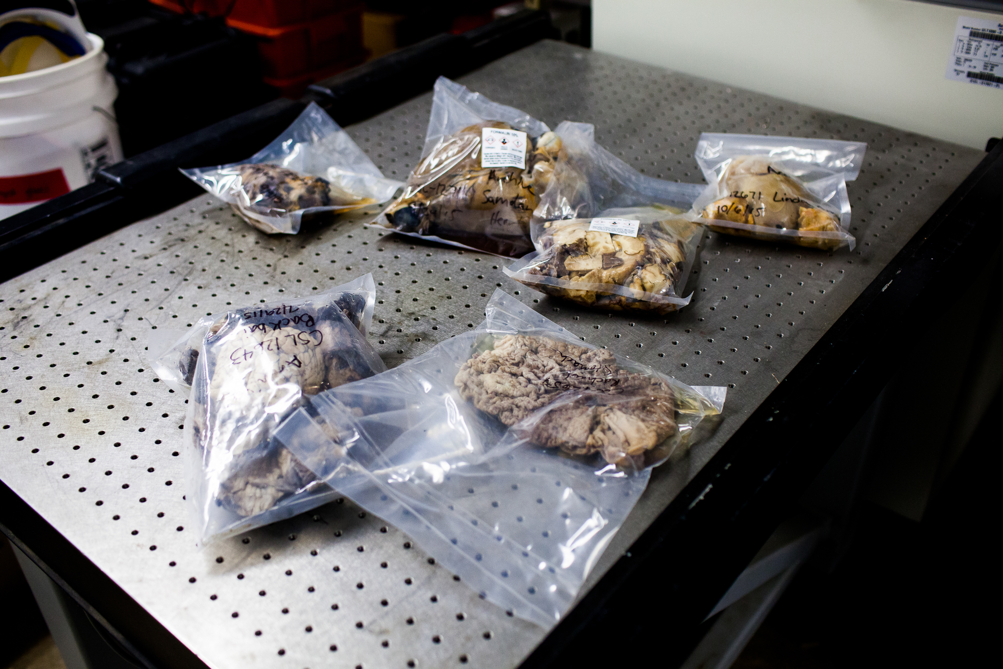 Many different types of tissue samples are stored on-site at The Marine Mammal Center, providing a wealth of information for further scientific research.
