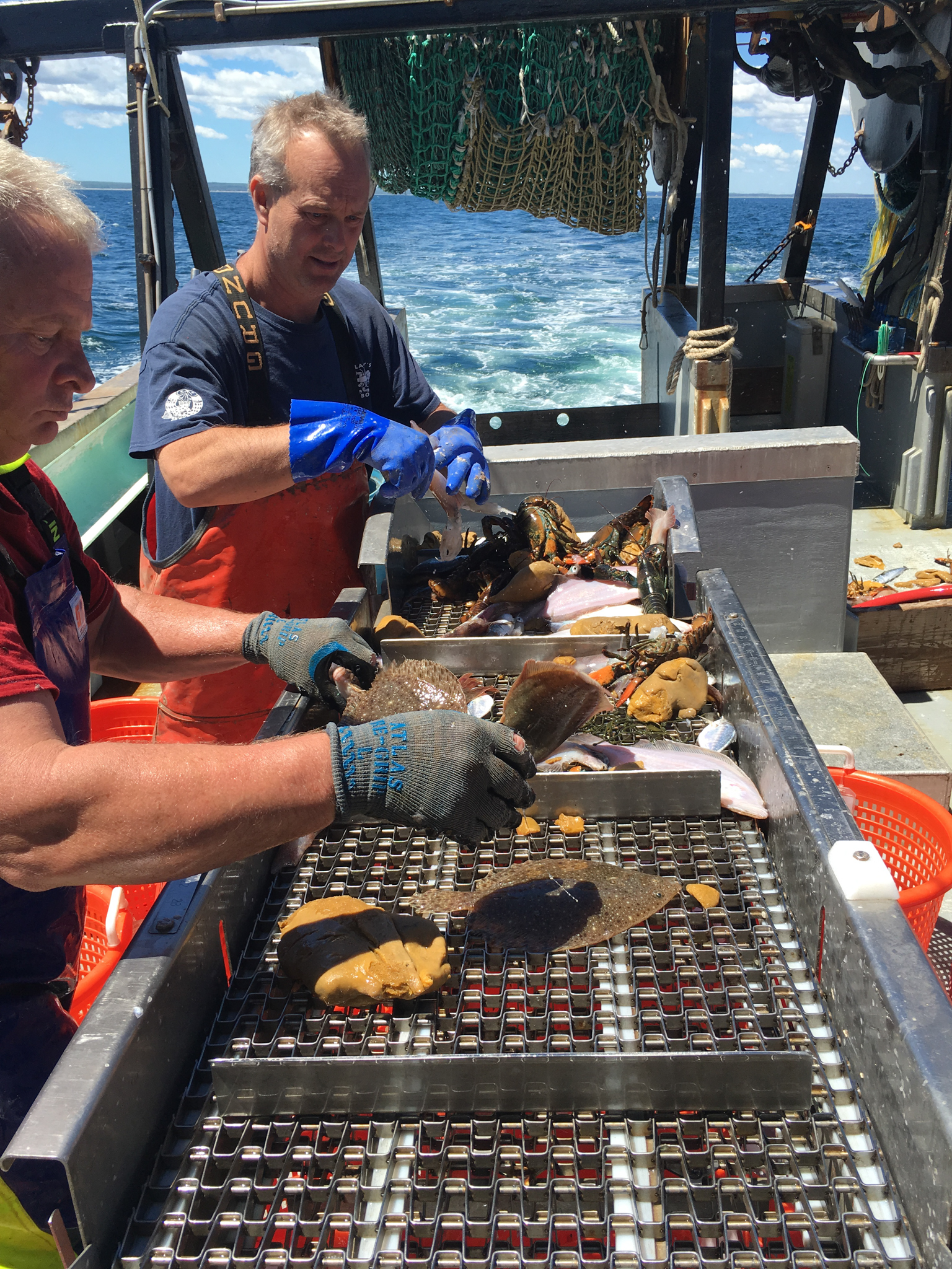 Bill Hoffman (right) and Paul Fitzgibbon sort the catch by species. Photo by Nicola Twilley