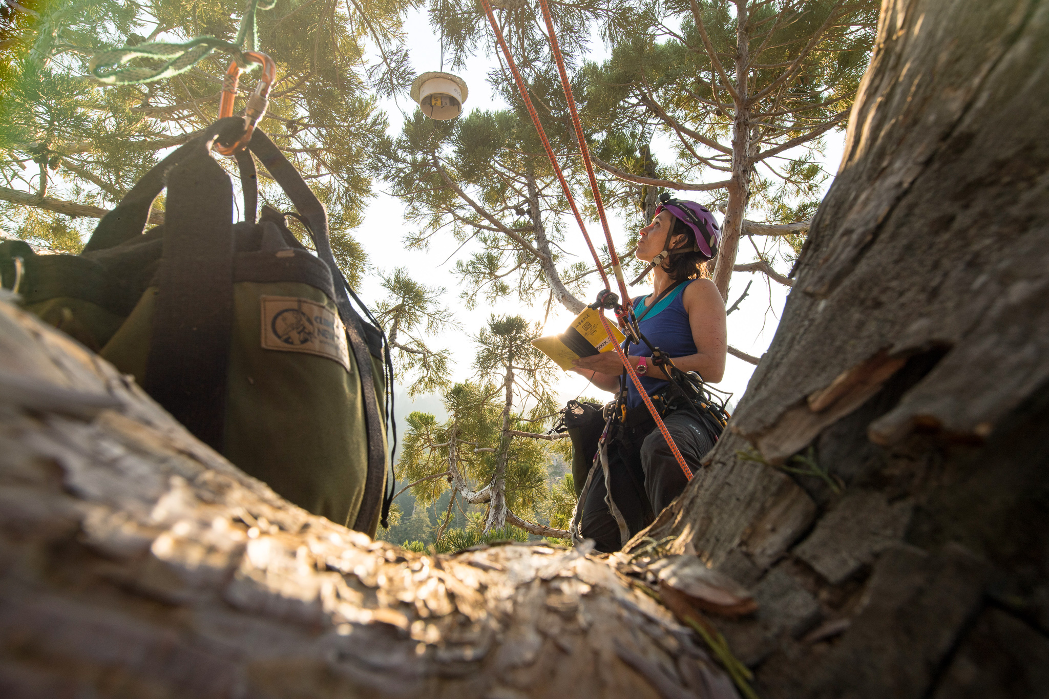 Wendy Baxter, a scientist at UC Berkley, records data while taking foliage samples from the top of a giant sequoia tree in Sequoia National Park
