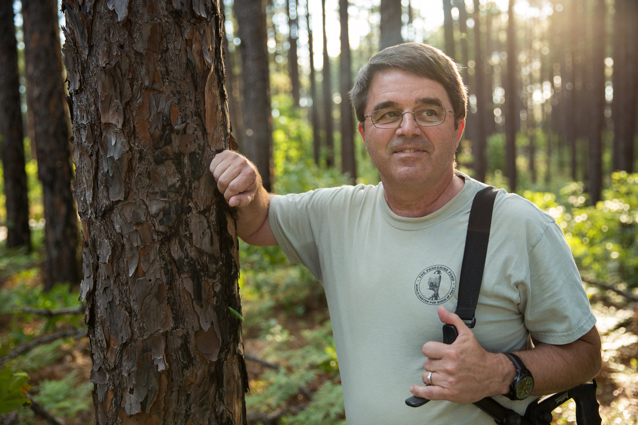 Biologist Jeff Walters, from Virginia Polytechnic Institute and State University, has been studying Fort Bragg's woodpeckers since 1983.