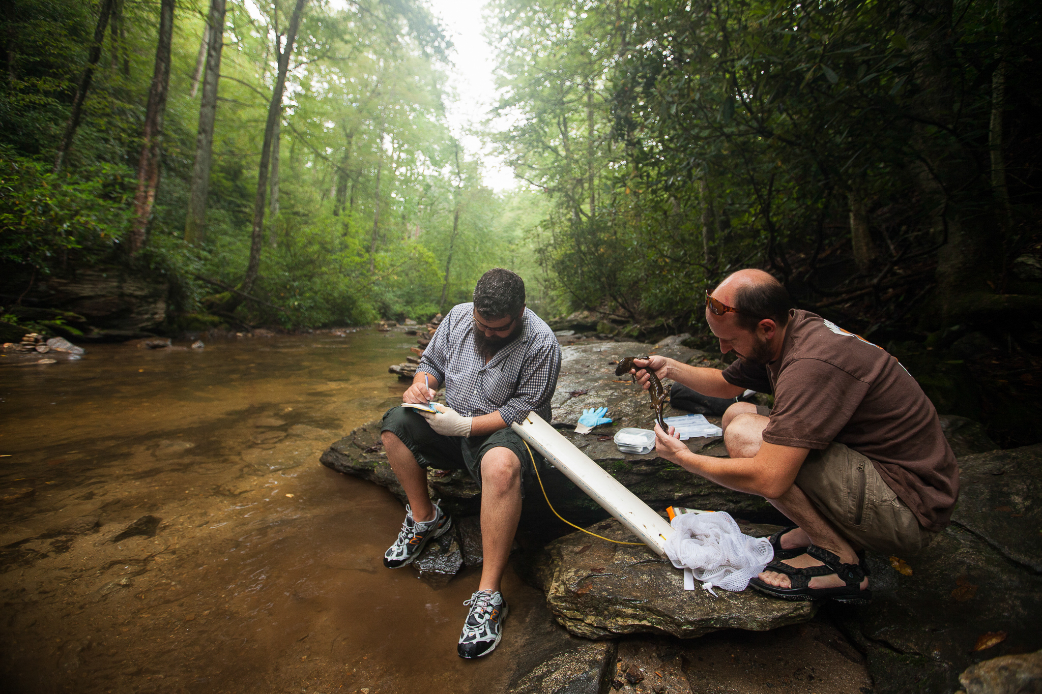 Biologists Jeff Humphries and Mike Sisson record data for an Eastern hellbender in a Southern Appalachian stream.