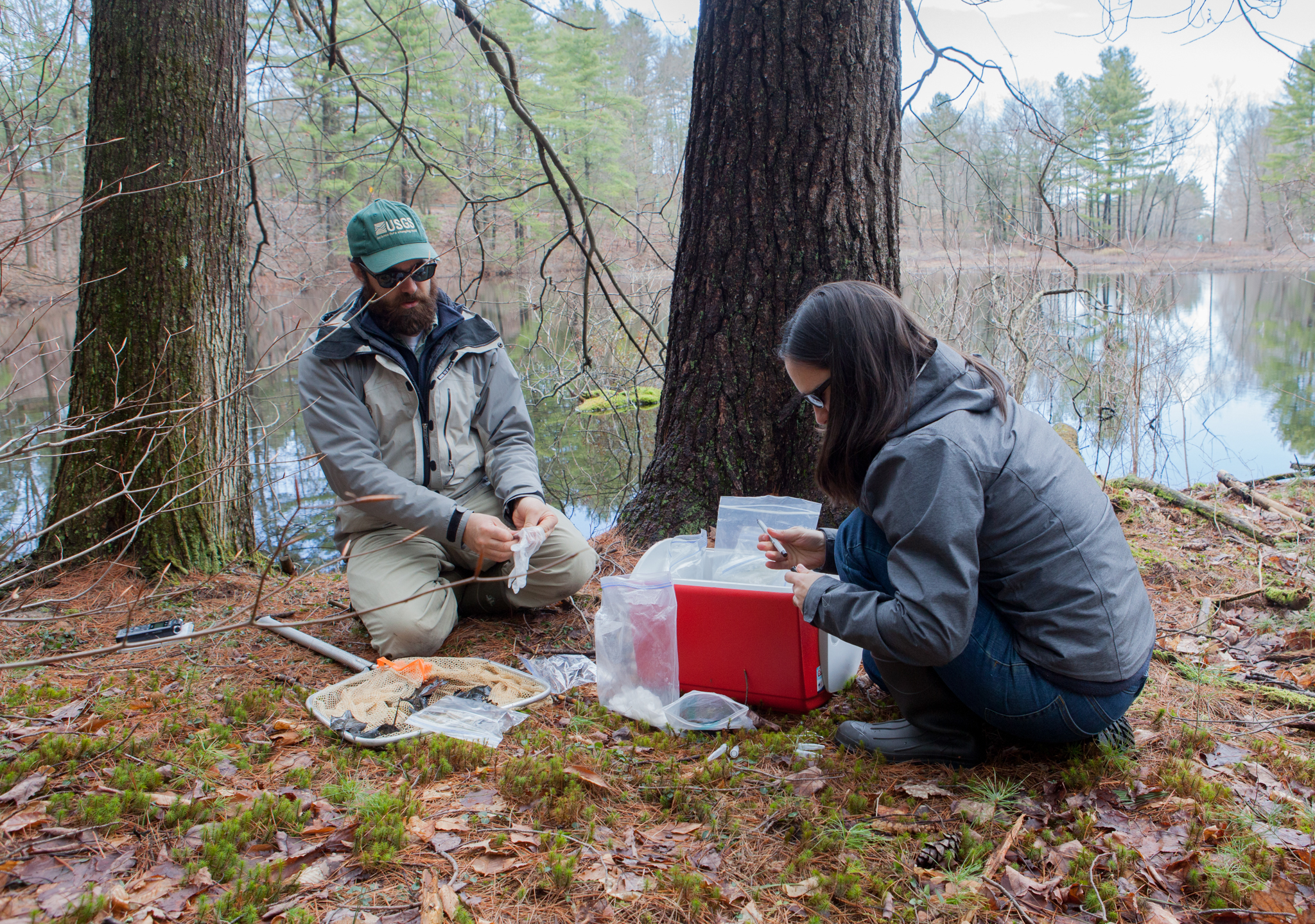 Grant and Adrianne Brand, a wildlife biologist also with the USGS, prepare to sample another newt for Bsal. They are part of a national task force hoping to keep Bsal at bay. Photograph by Geoffrey Giller