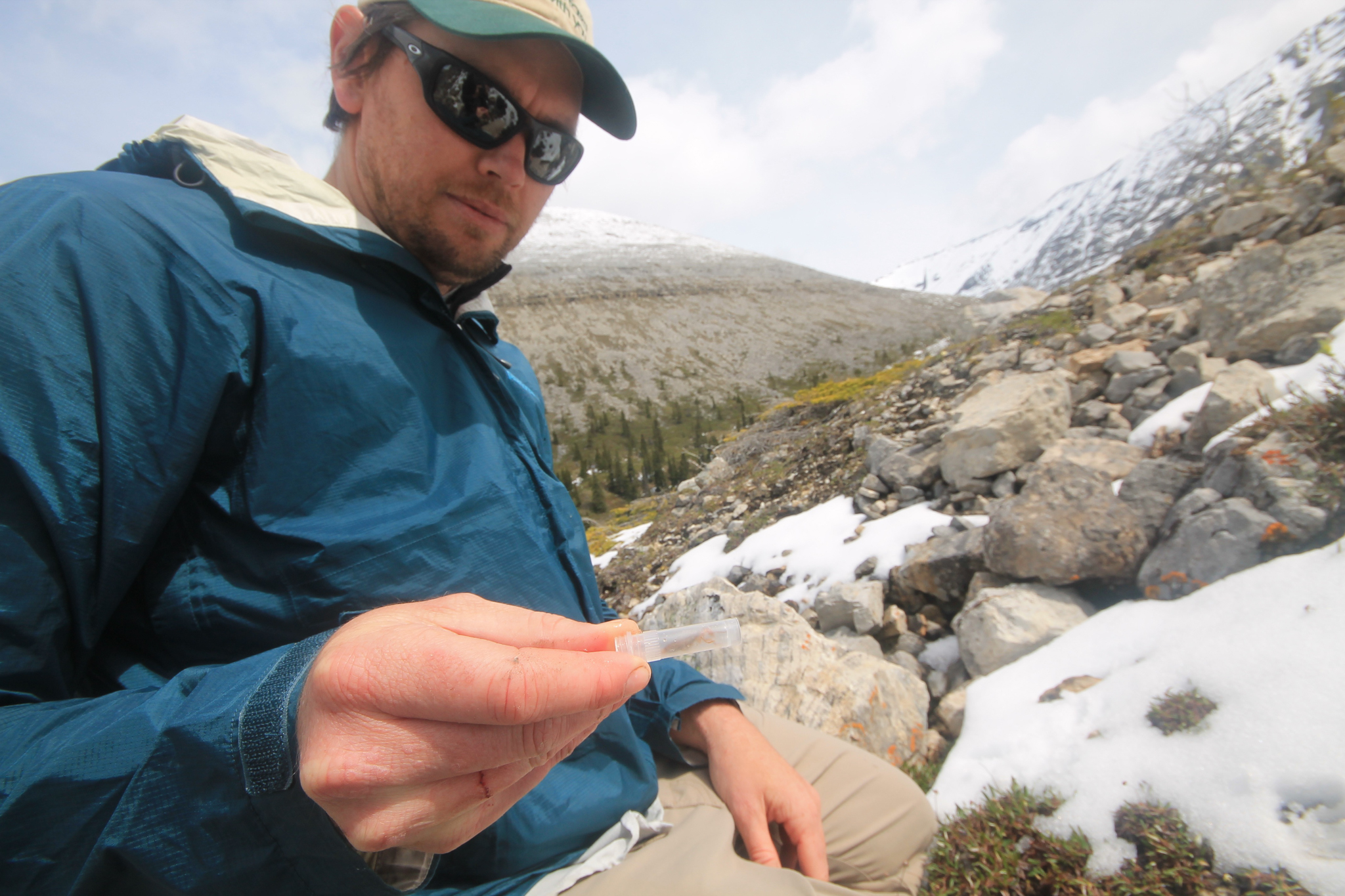 Sean Schoville places an ice crawler in an alcohol-filled vial to preserve its DNA for analysis back in the lab.